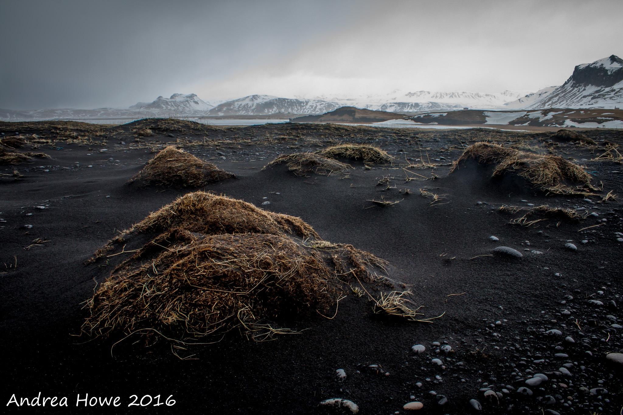 Black Beach Dunes by donuthead1