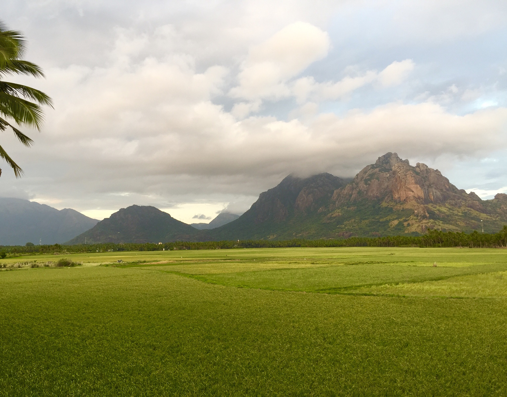 Photo in Landscape #mythical mount #end of western ghats #southern end #indian rurals #paddy fields