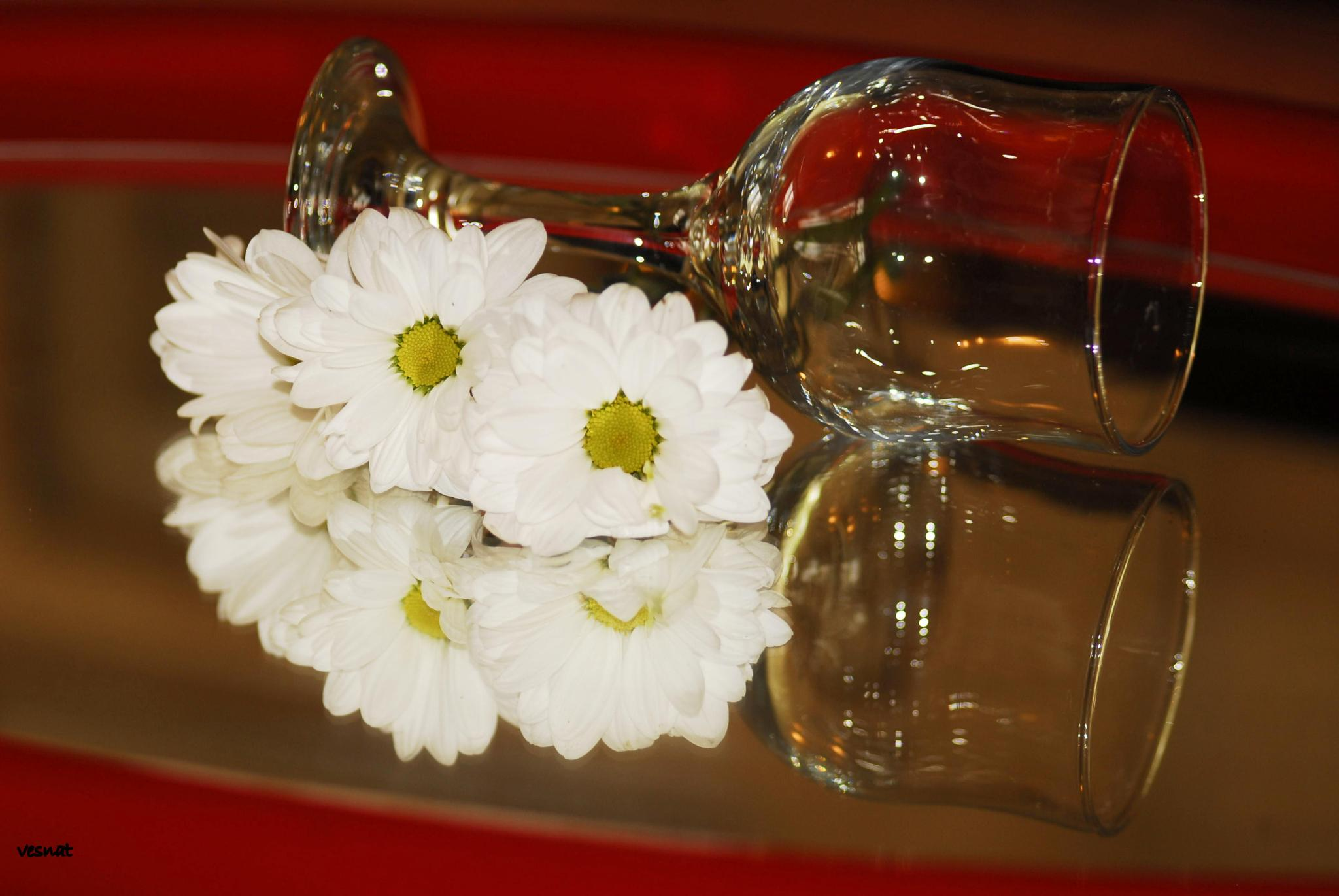 white flowers and glass in the mirror by vesna.tafra