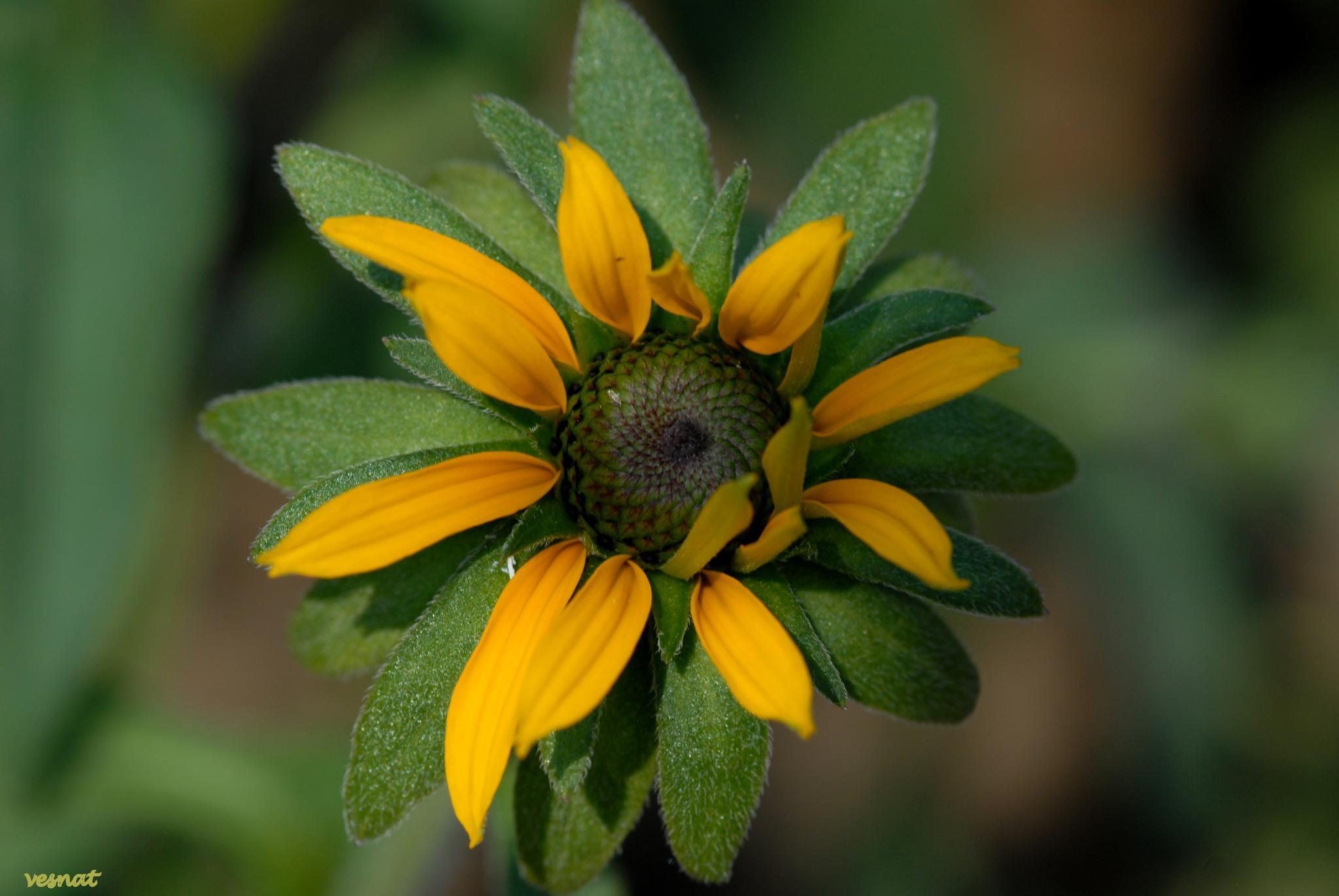 I will be a flower by vesna.tafra