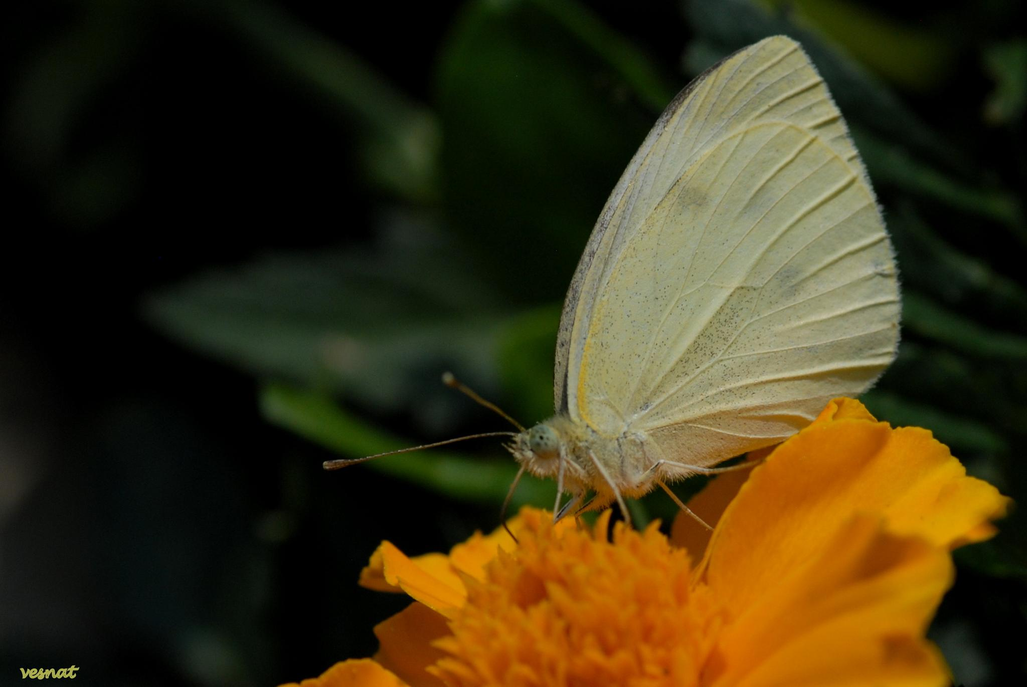 the white one by vesna.tafra
