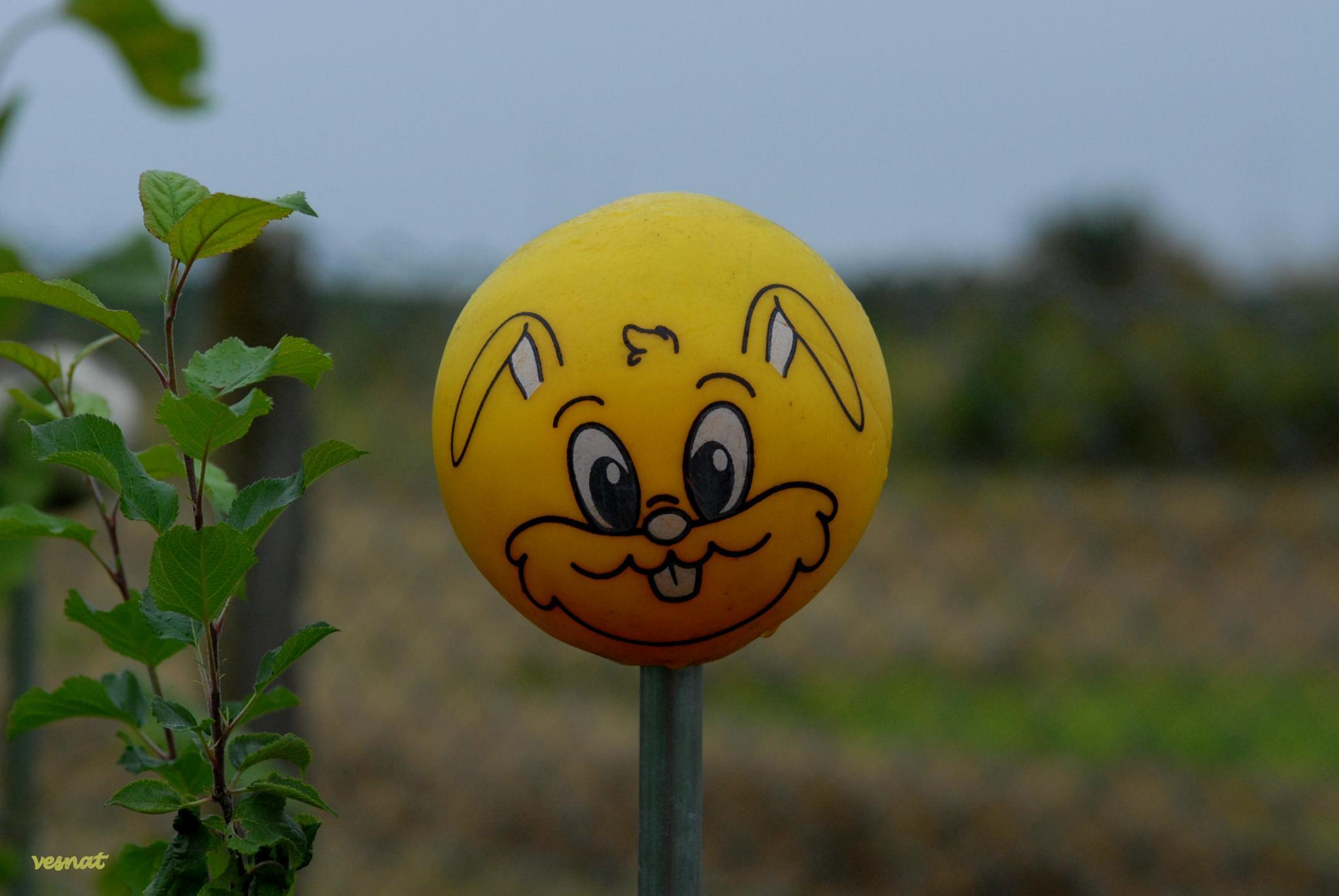 happy bunny from the garden.. :-) by vesna.tafra