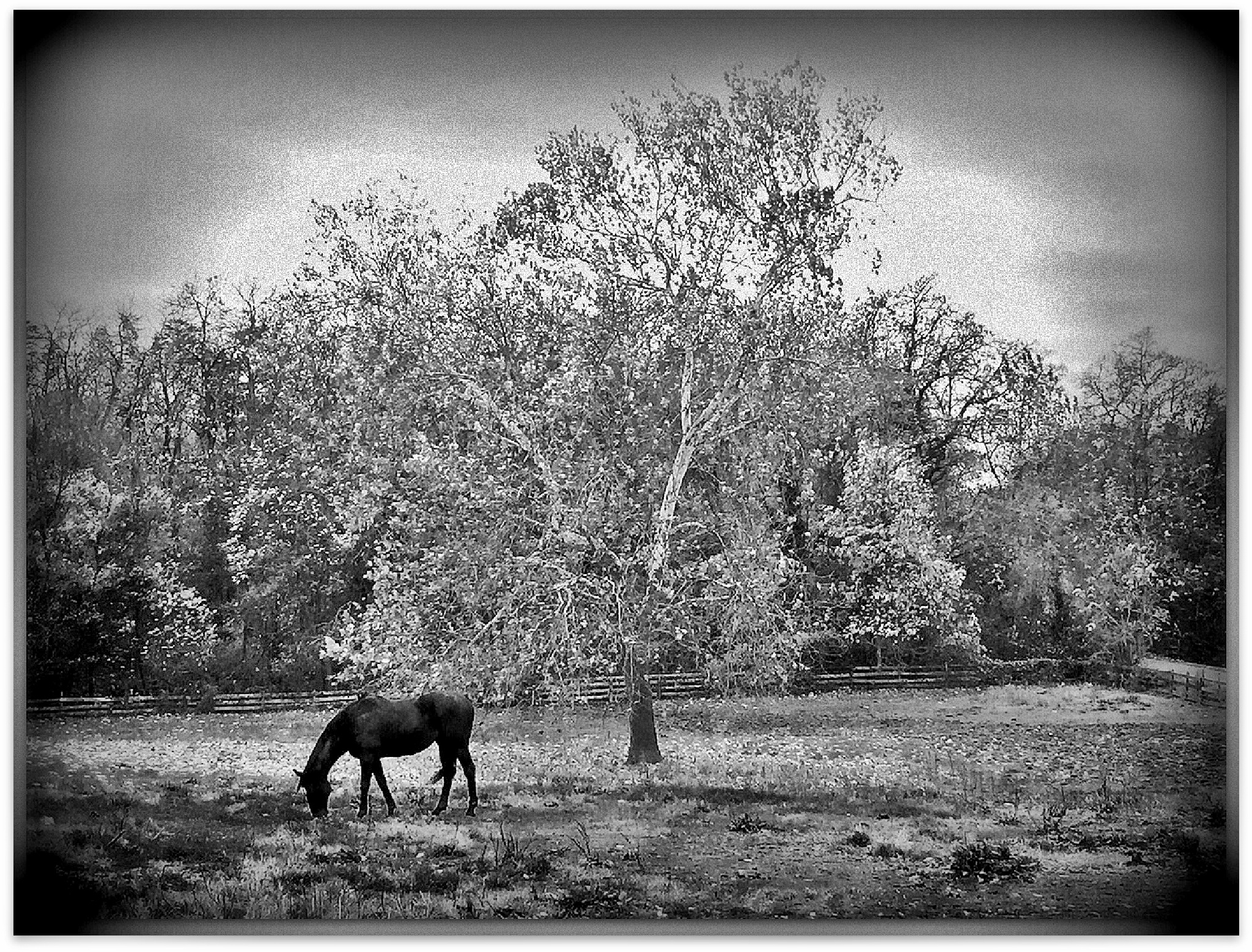Horse in Black and White by DennyPaulPlatania