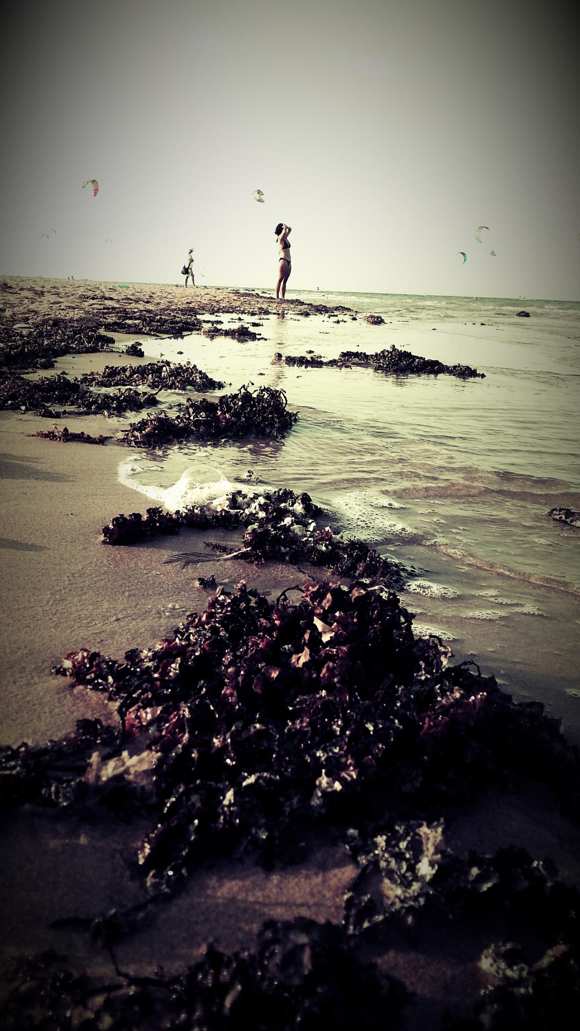 the beach by Waleed Elmiligy