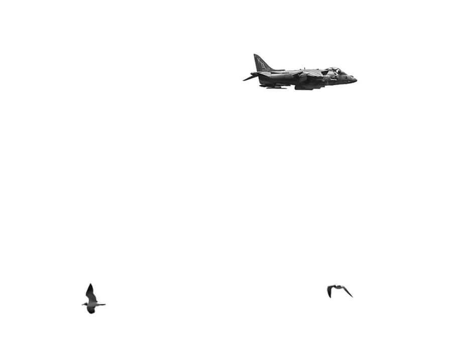 Birds by FotoArteRemon