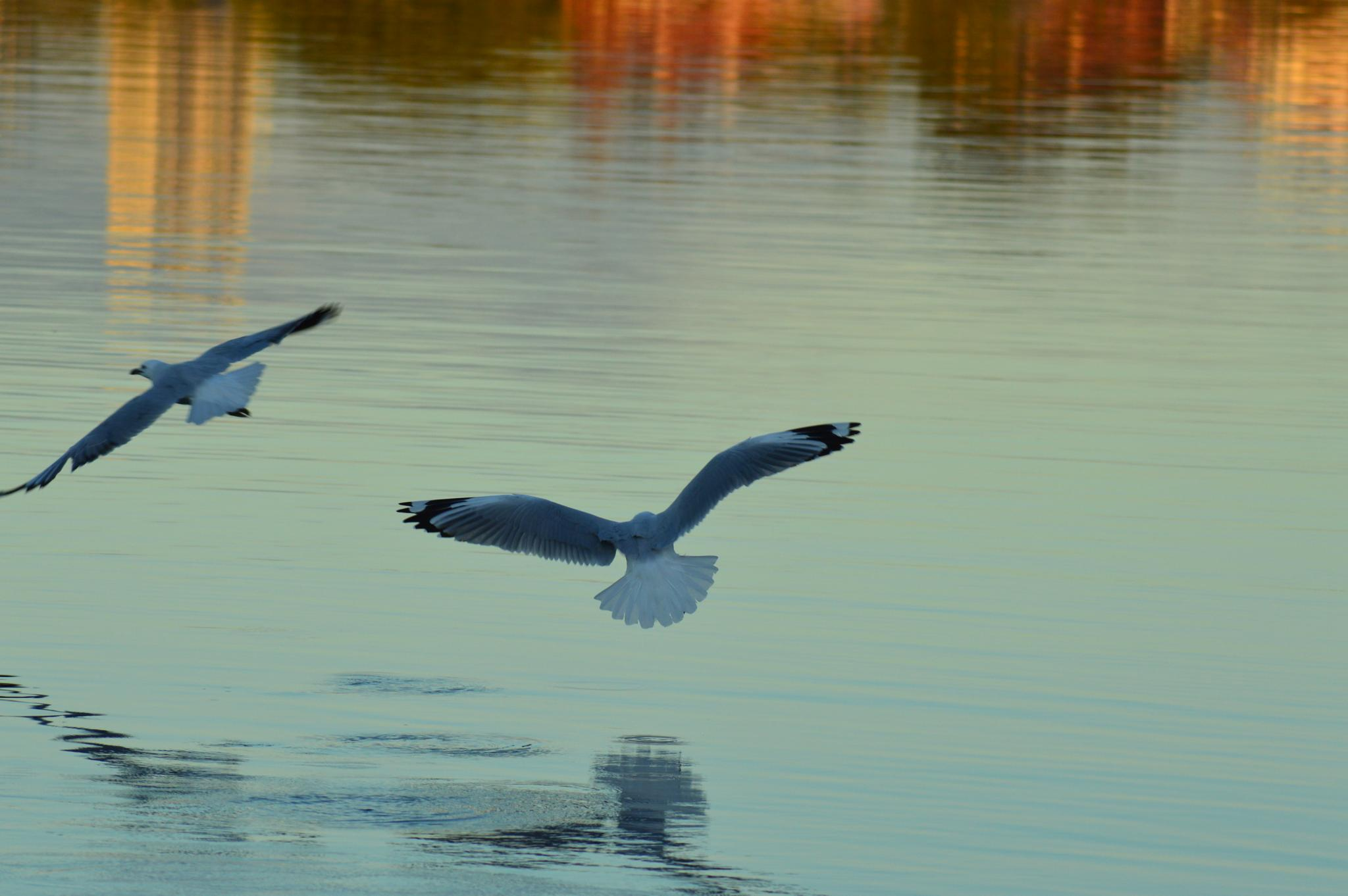 The chase. by mark.eatwell.3