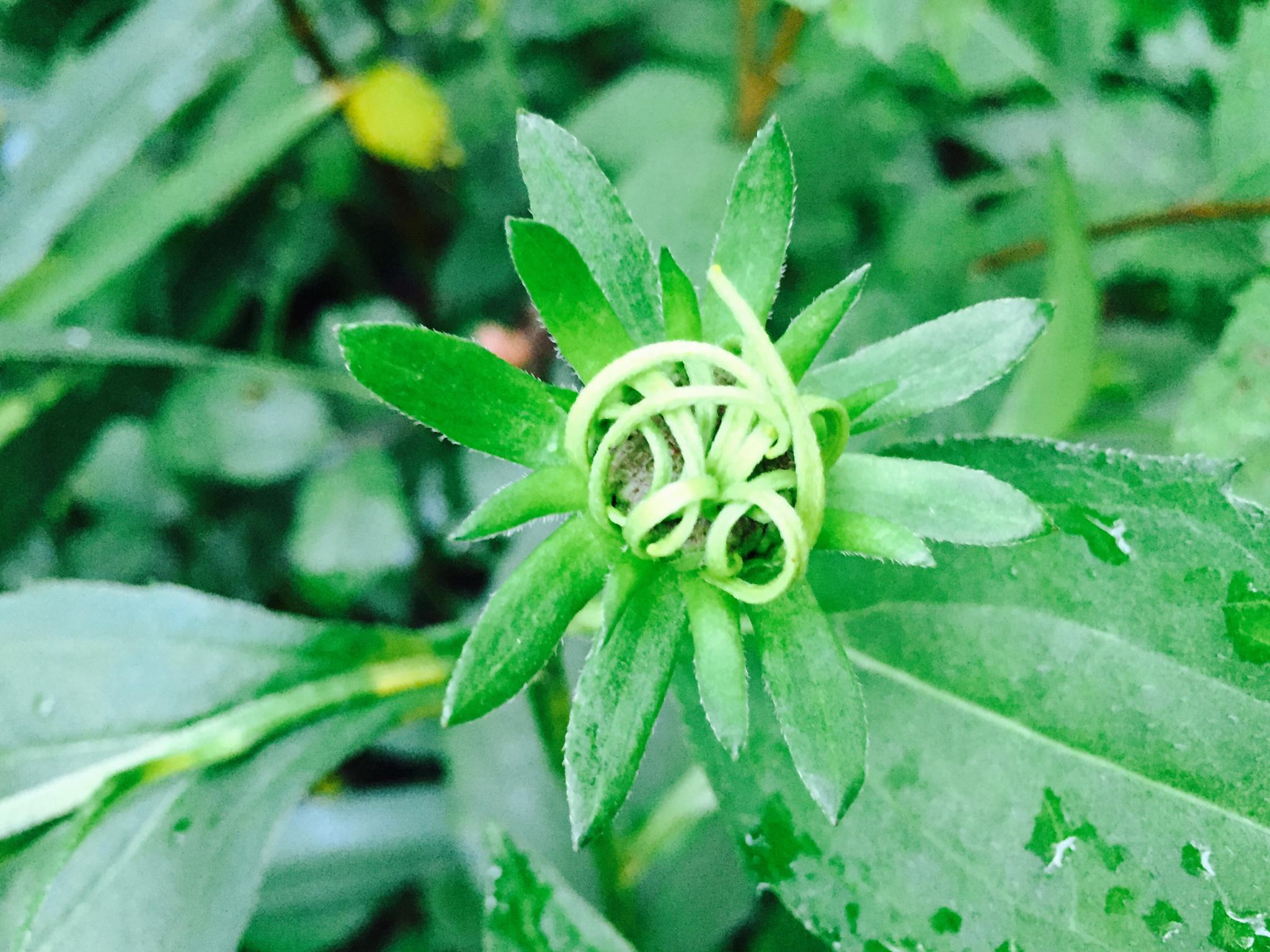 Photo in Nature #green #plant #flower #nature #ohio