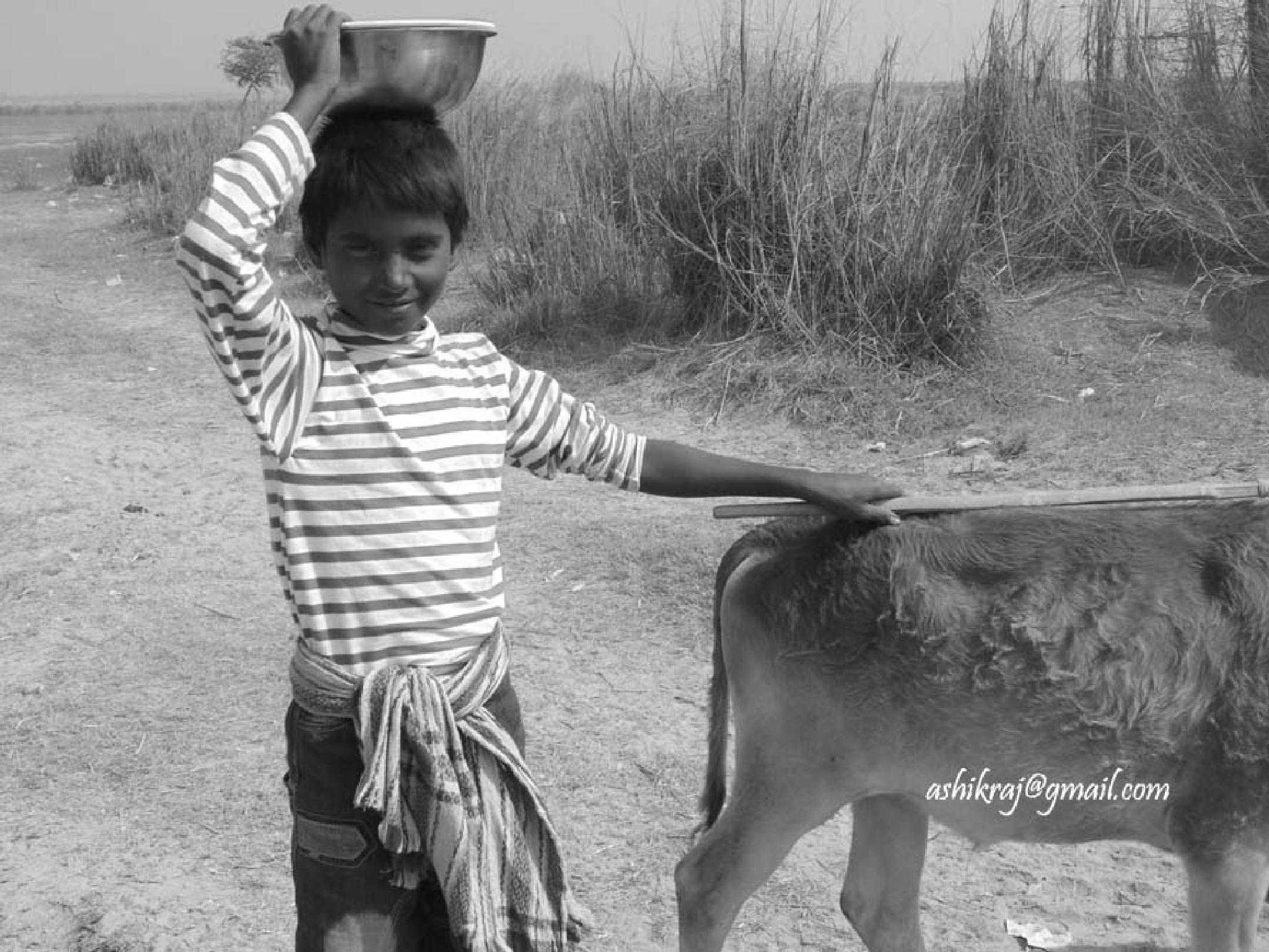 Cow Boy- রাখাল ছেলে by Ashik Iqbal