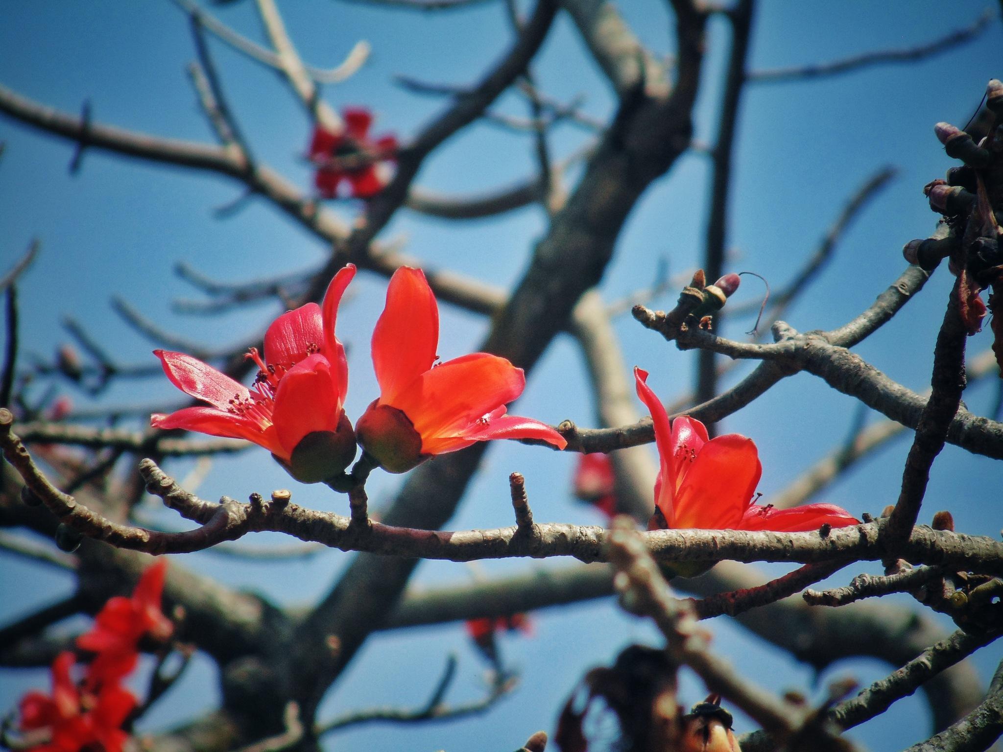 বসন্ত - Spring by Ashik Iqbal