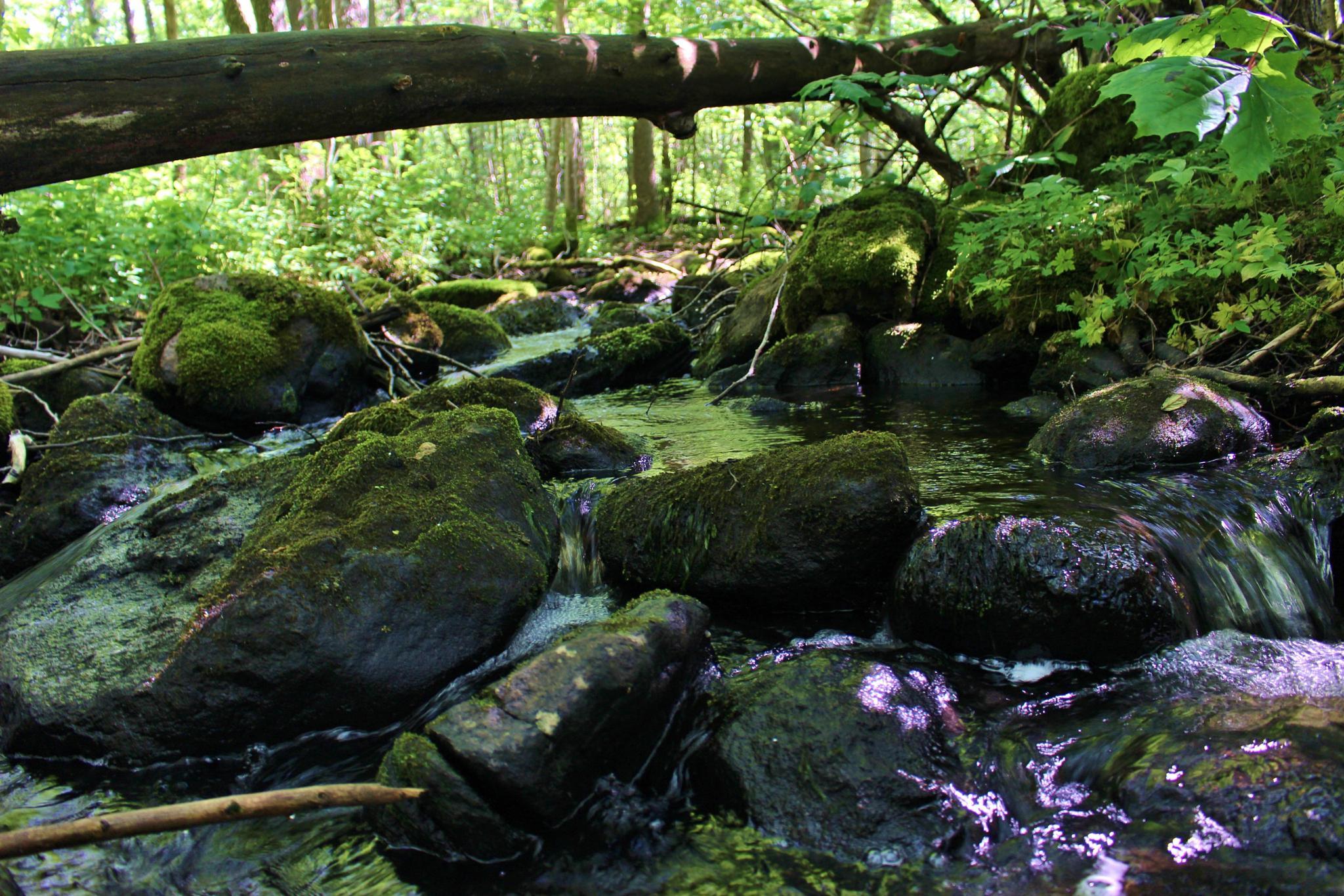 Slippery stones by annemarie.augustsson