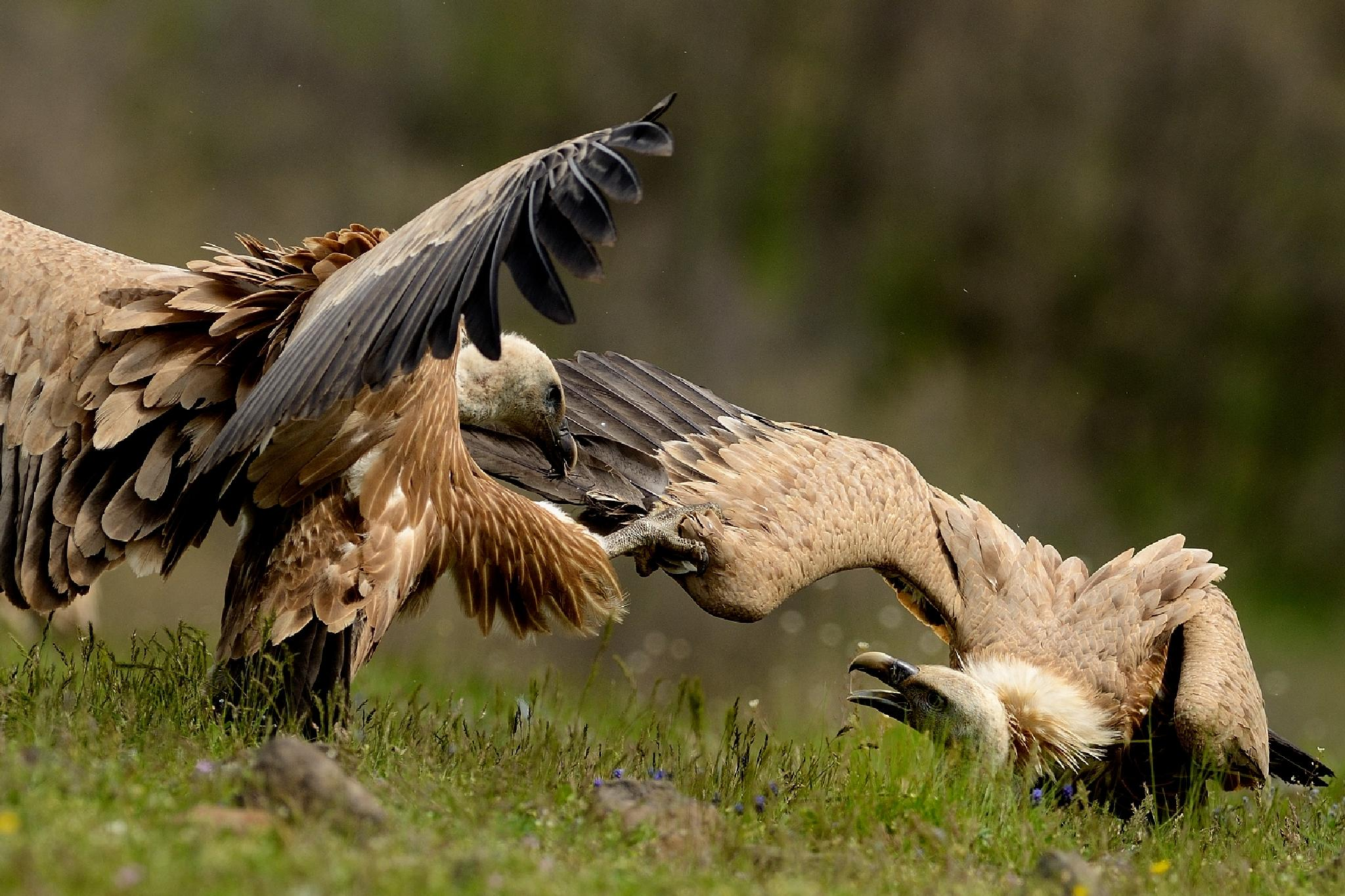 Fighting by frode.wendelbo