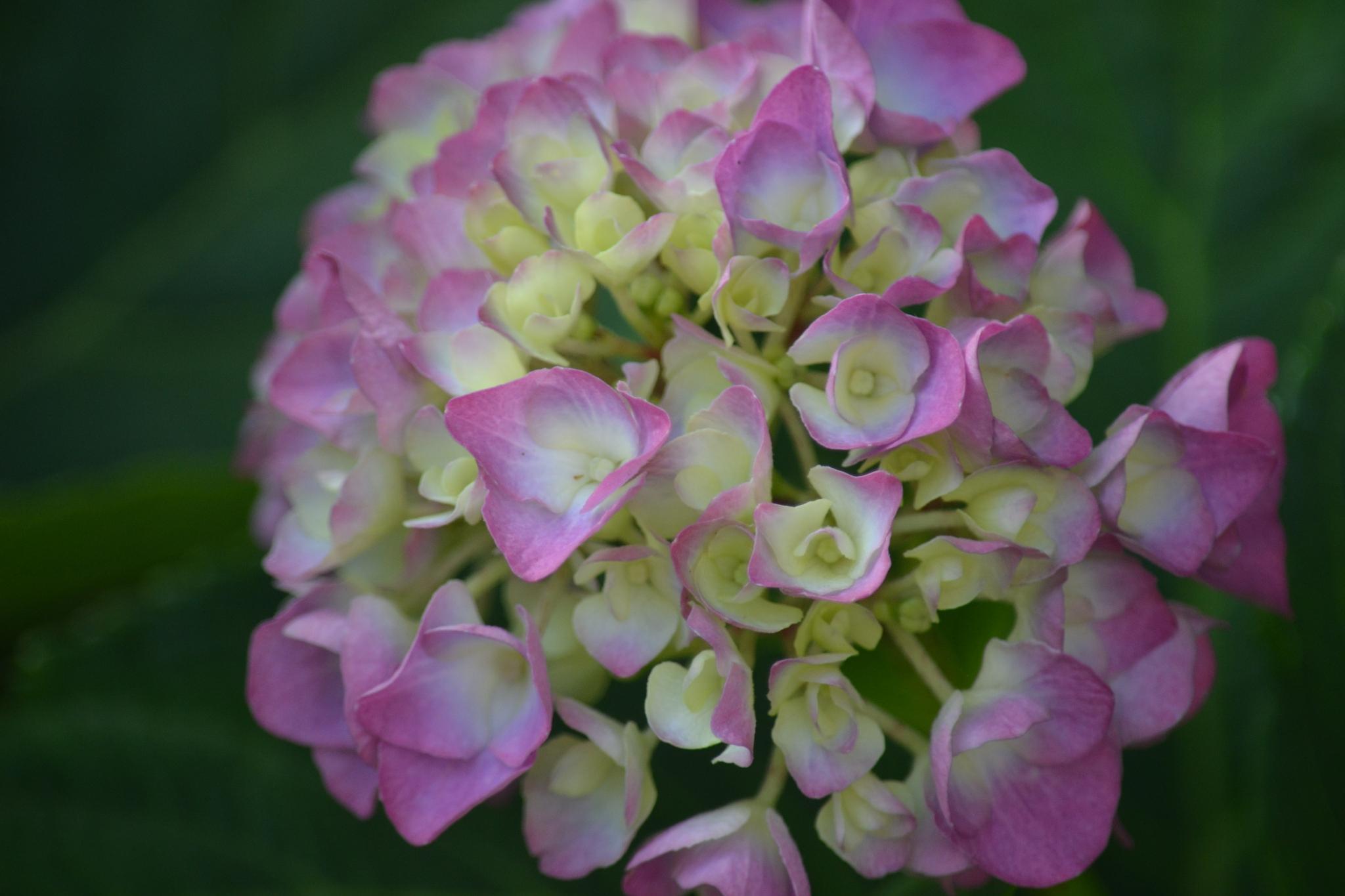 Flower by veronica.strobeckpersson