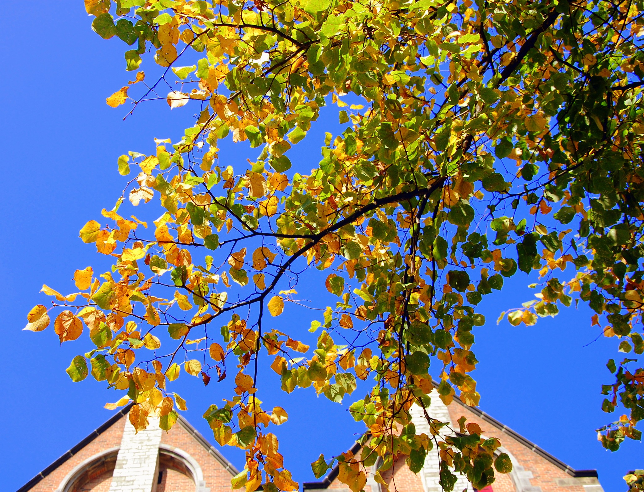 Autumn Glory In Leiden by goga.dt