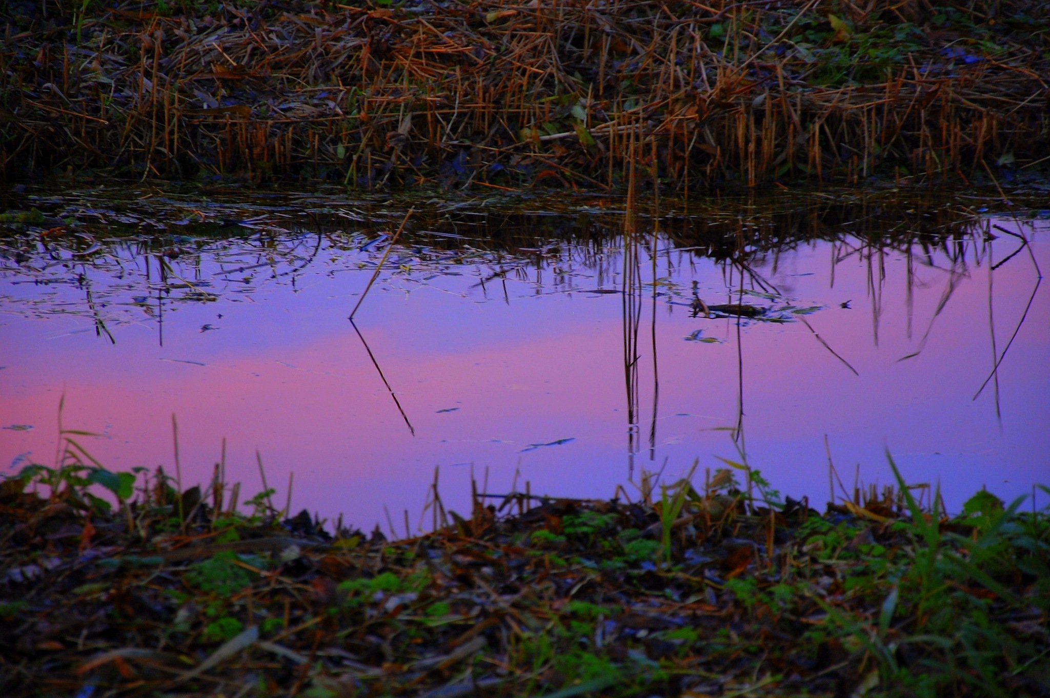 Pink Clouds On The Water by goga.dt