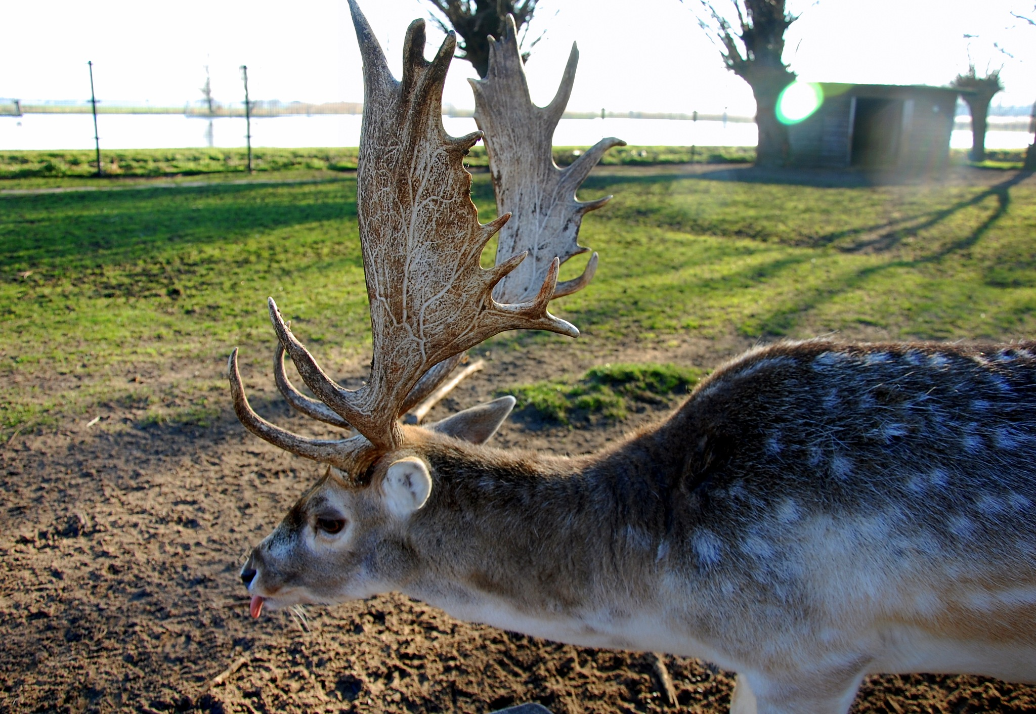 Deer With Beautiful Antlers by goga.dt