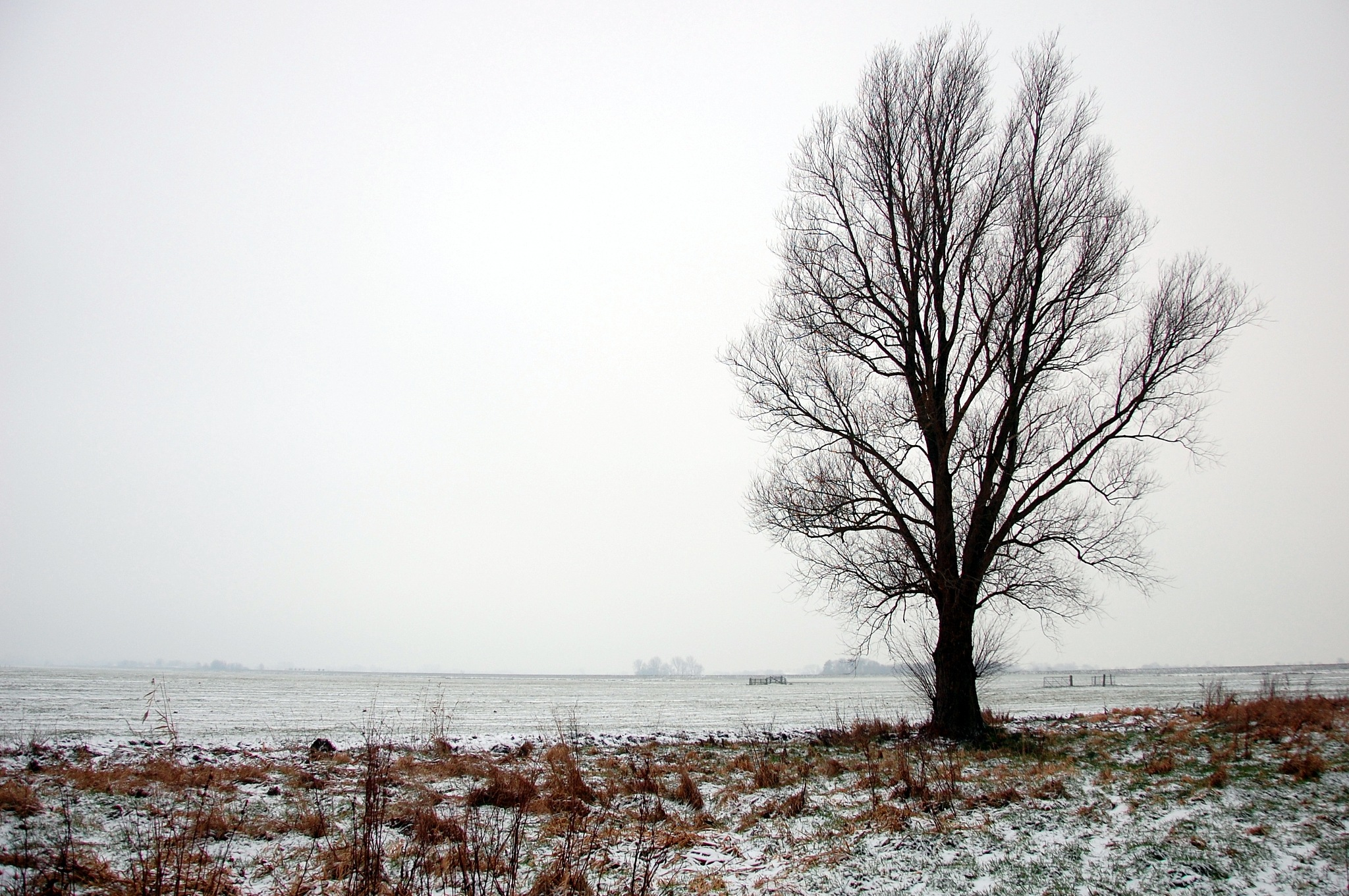 In Winter's Silence by goga.dt