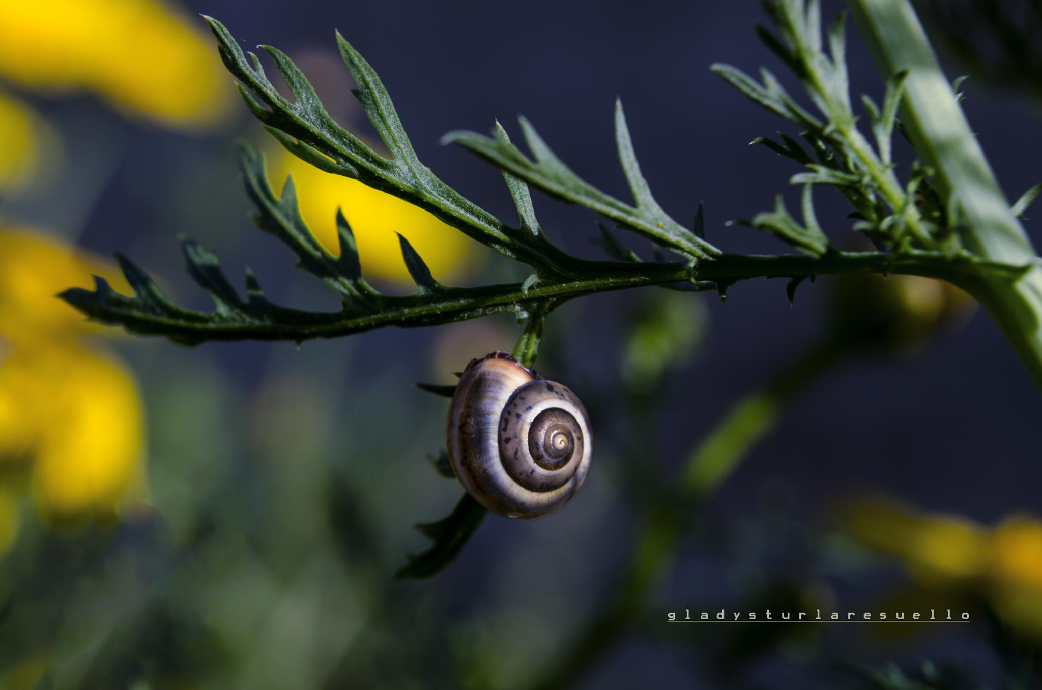 HANG ON! by tresuellogladz