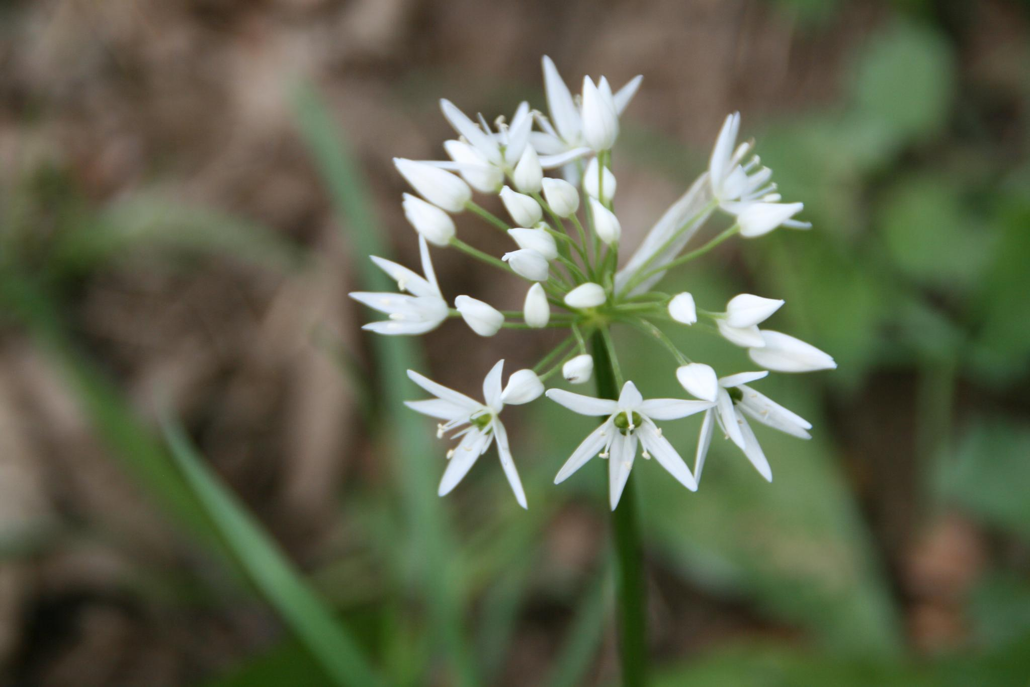 flower by helen.vandenbroek.9