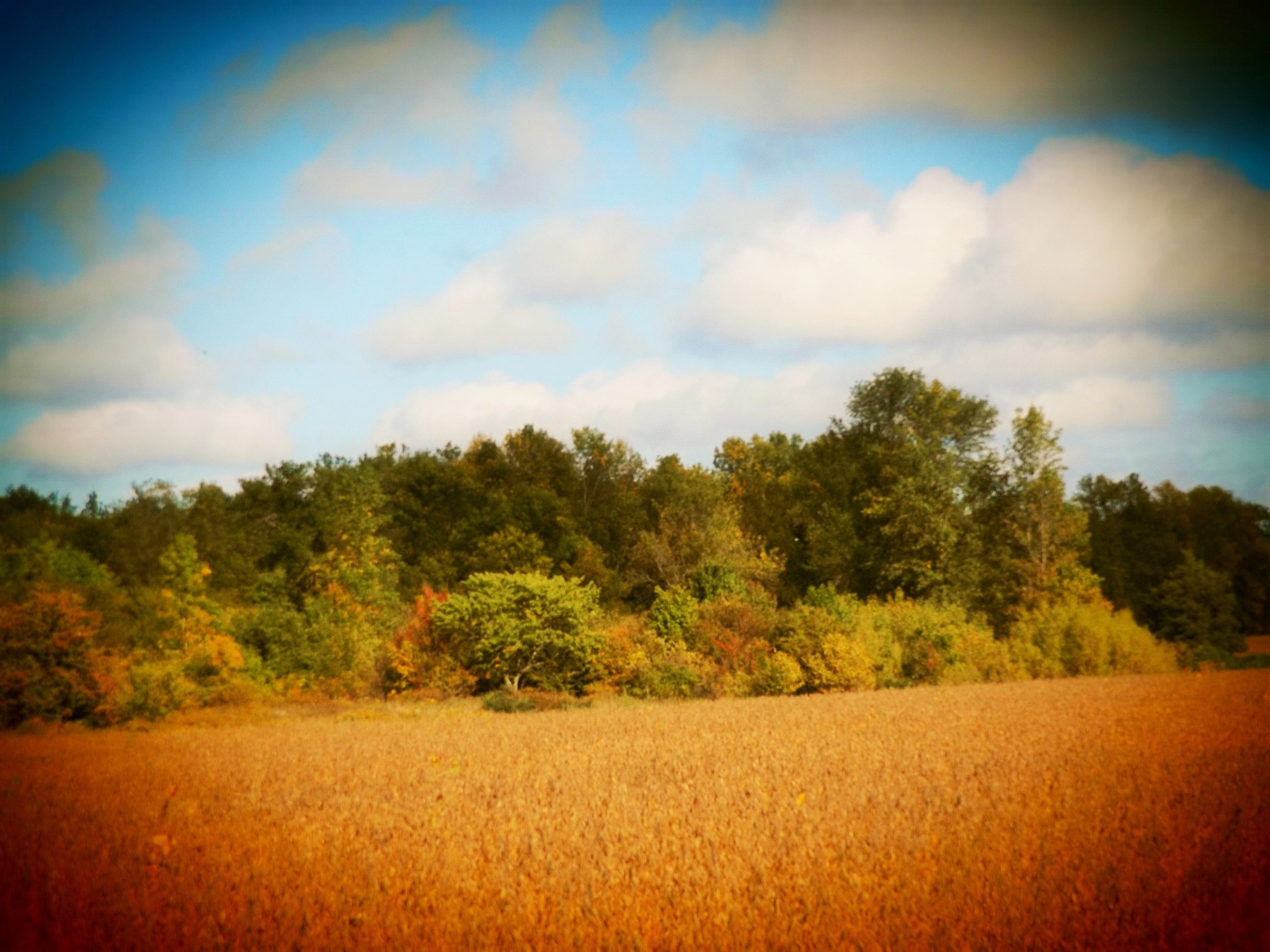 COUNTRY FIELD OF COLORS by Dawn Hoffmeister