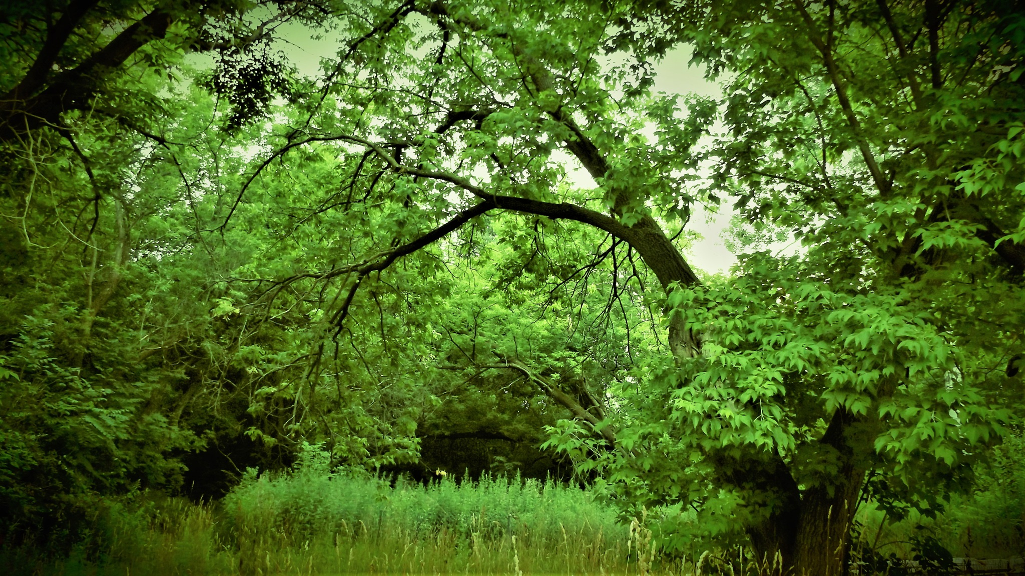 GREEN ON THE TREES IN THE WOODS by Dawn Hoffmeister