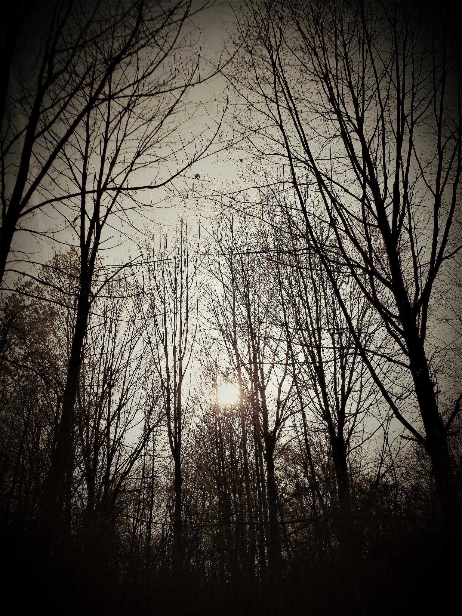 LOOKING UP by Dawn Hoffmeister