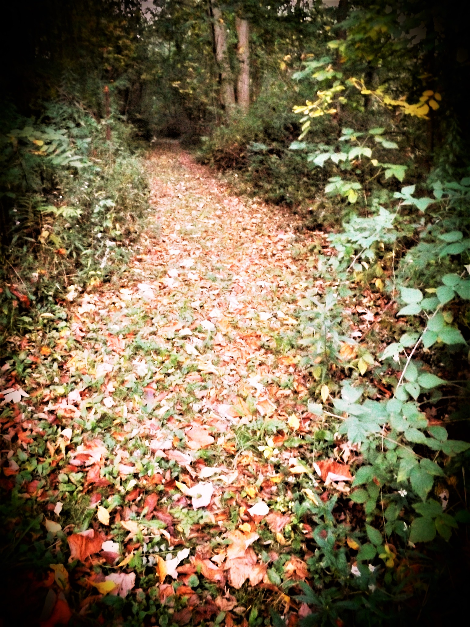 PATH OF AUTUMN LEAVES by Dawn Hoffmeister