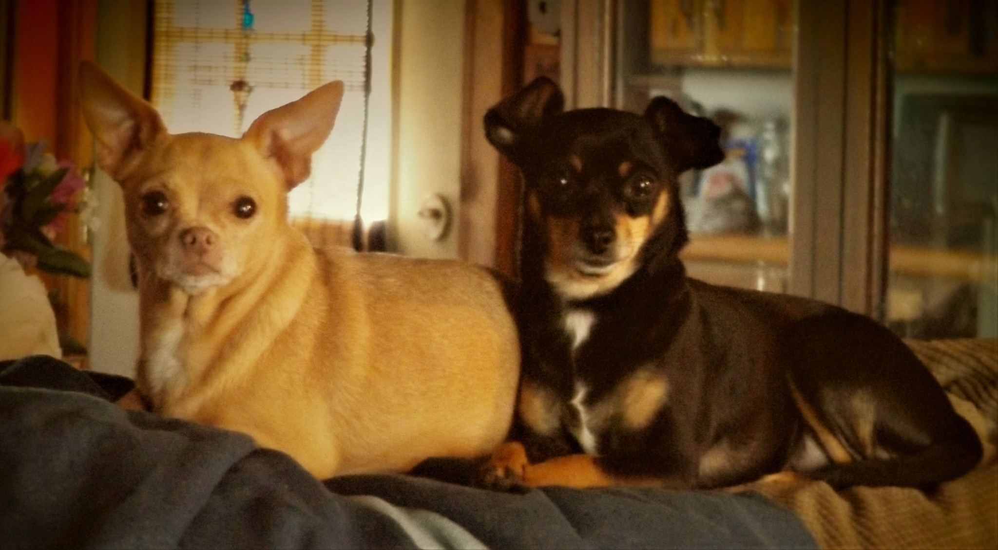 MY BABIES LILY AND CHLOE by Dawn Hoffmeister