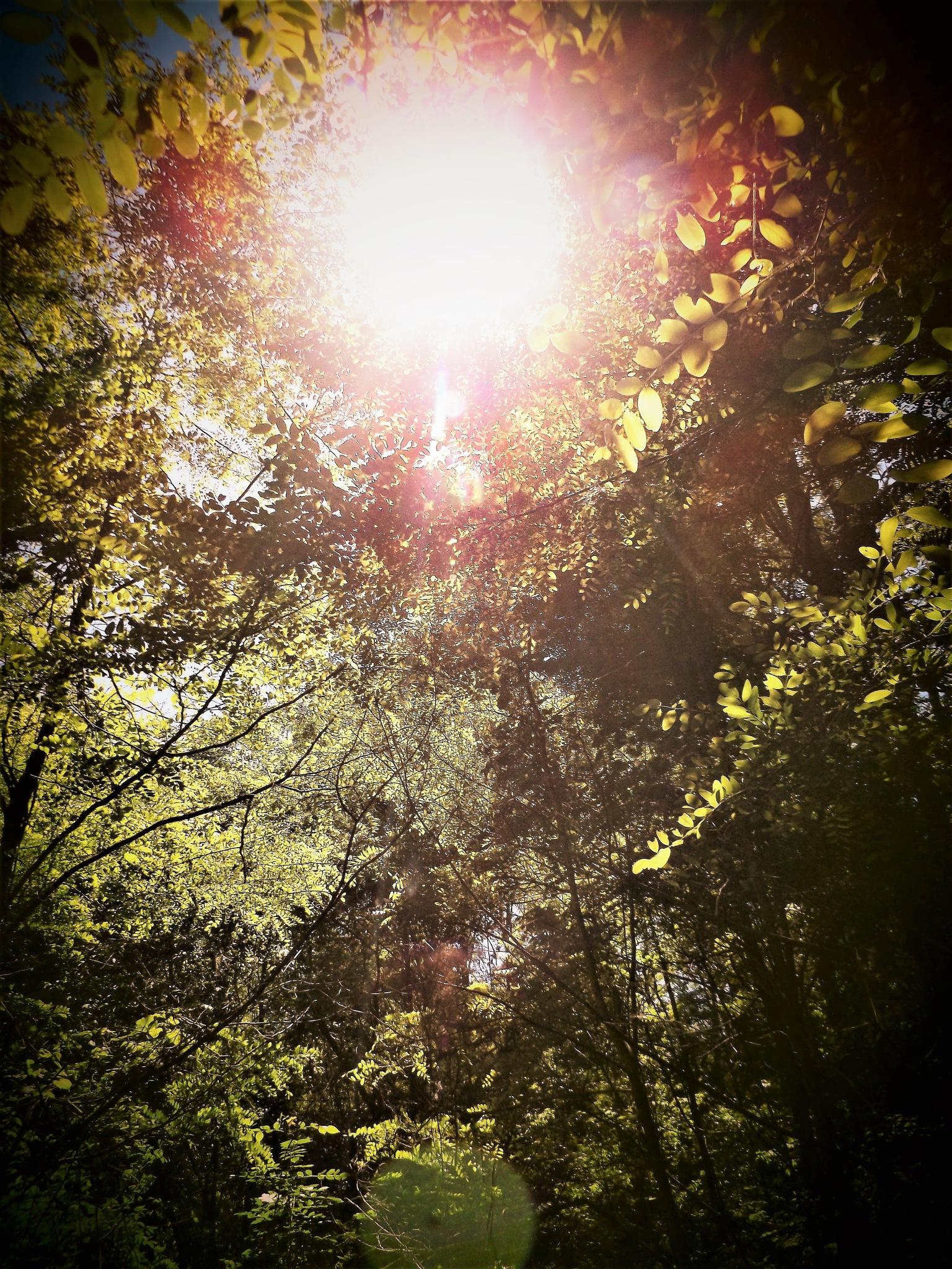 UNUSUAL SUN ORBS by Dawn Hoffmeister