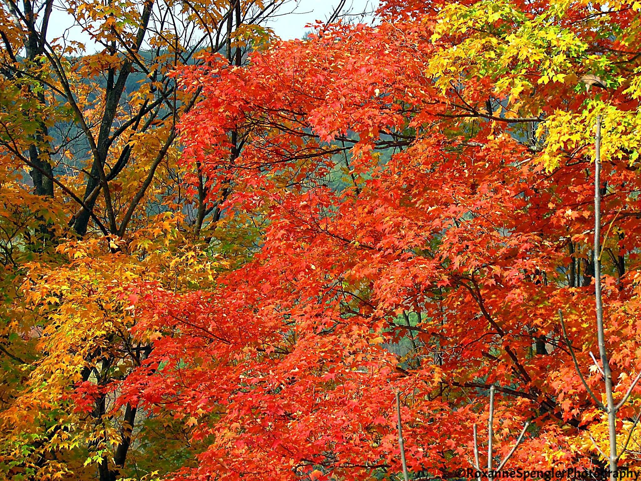 Autumn by Roxanne Spengler