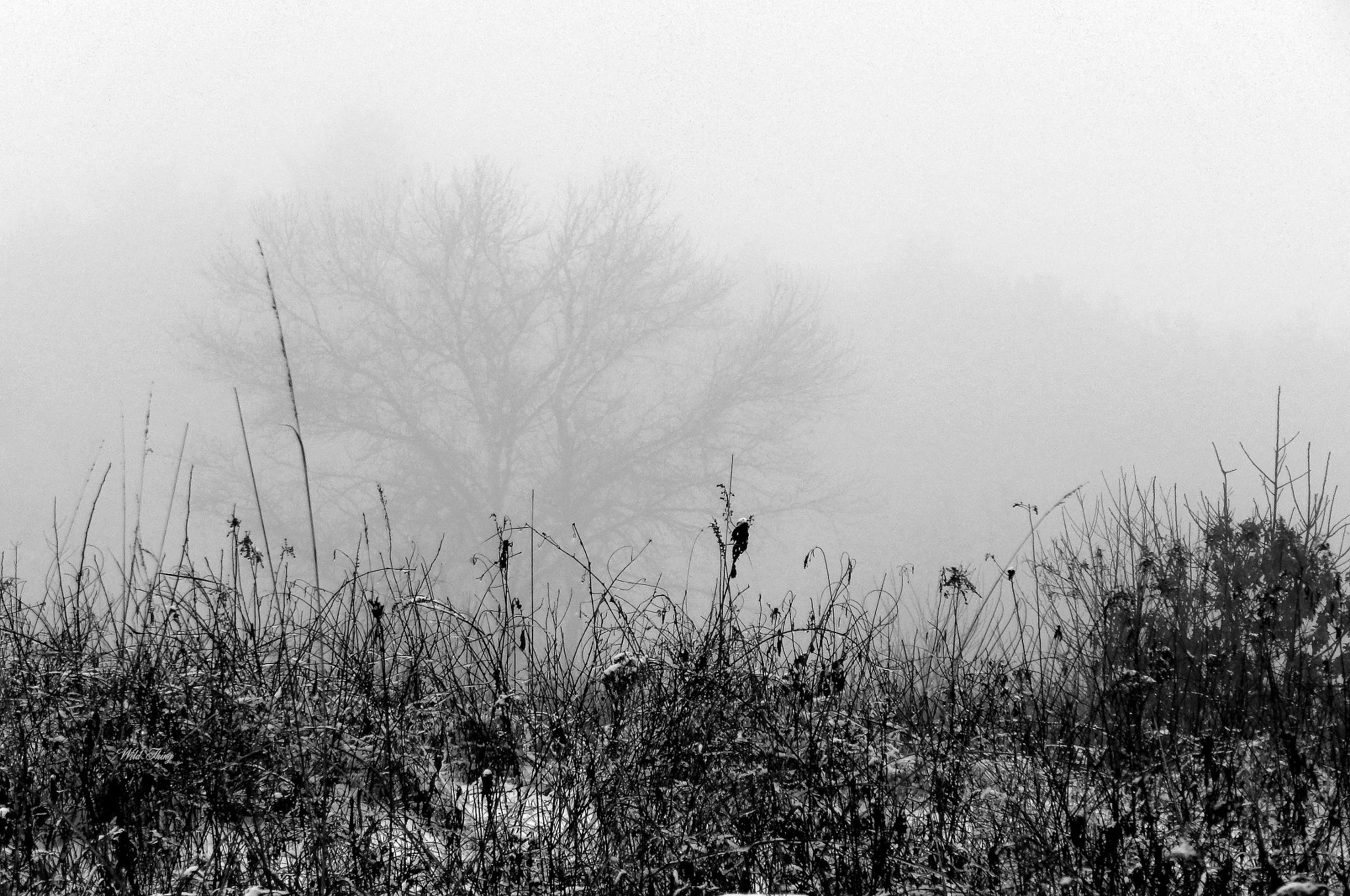 A Winter's Day by աﻨlժ էհﻨռց
