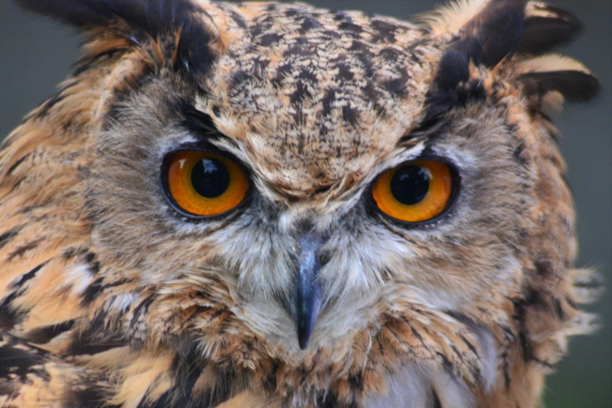 Eyes by Andrew Longhurst