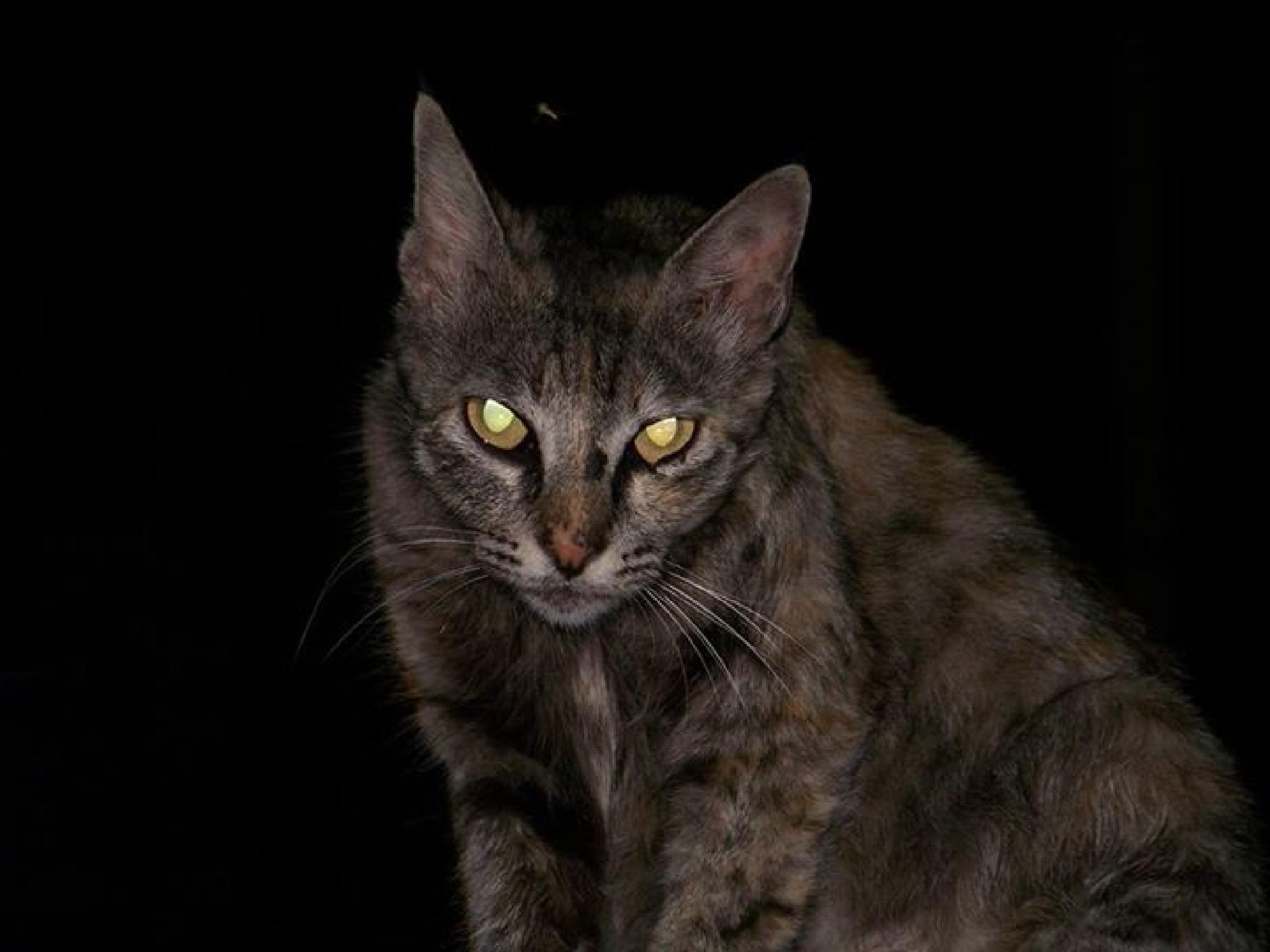 Cat by Sandesh Jadhav