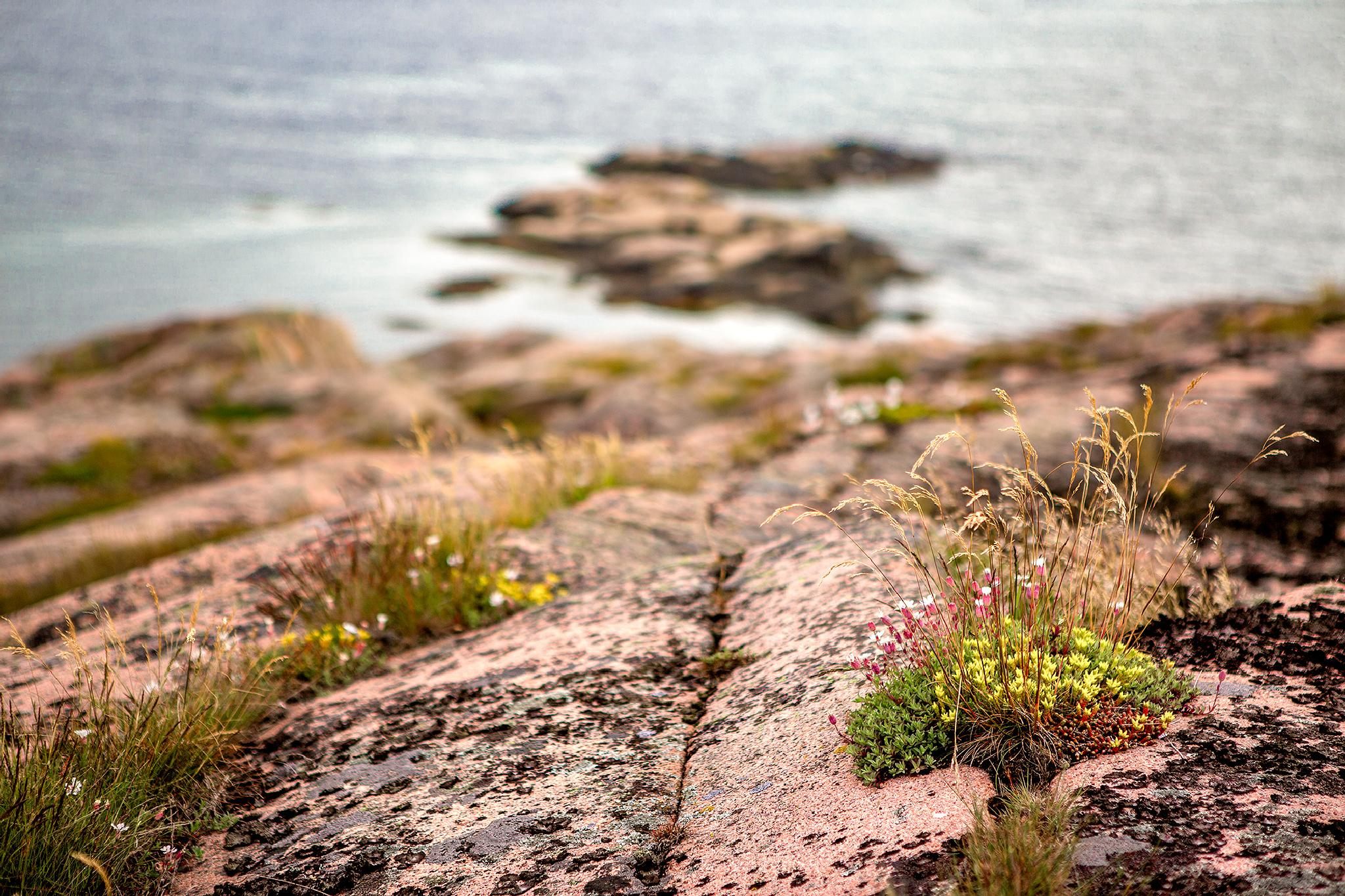 Falling into the sea by Pär Ohlson