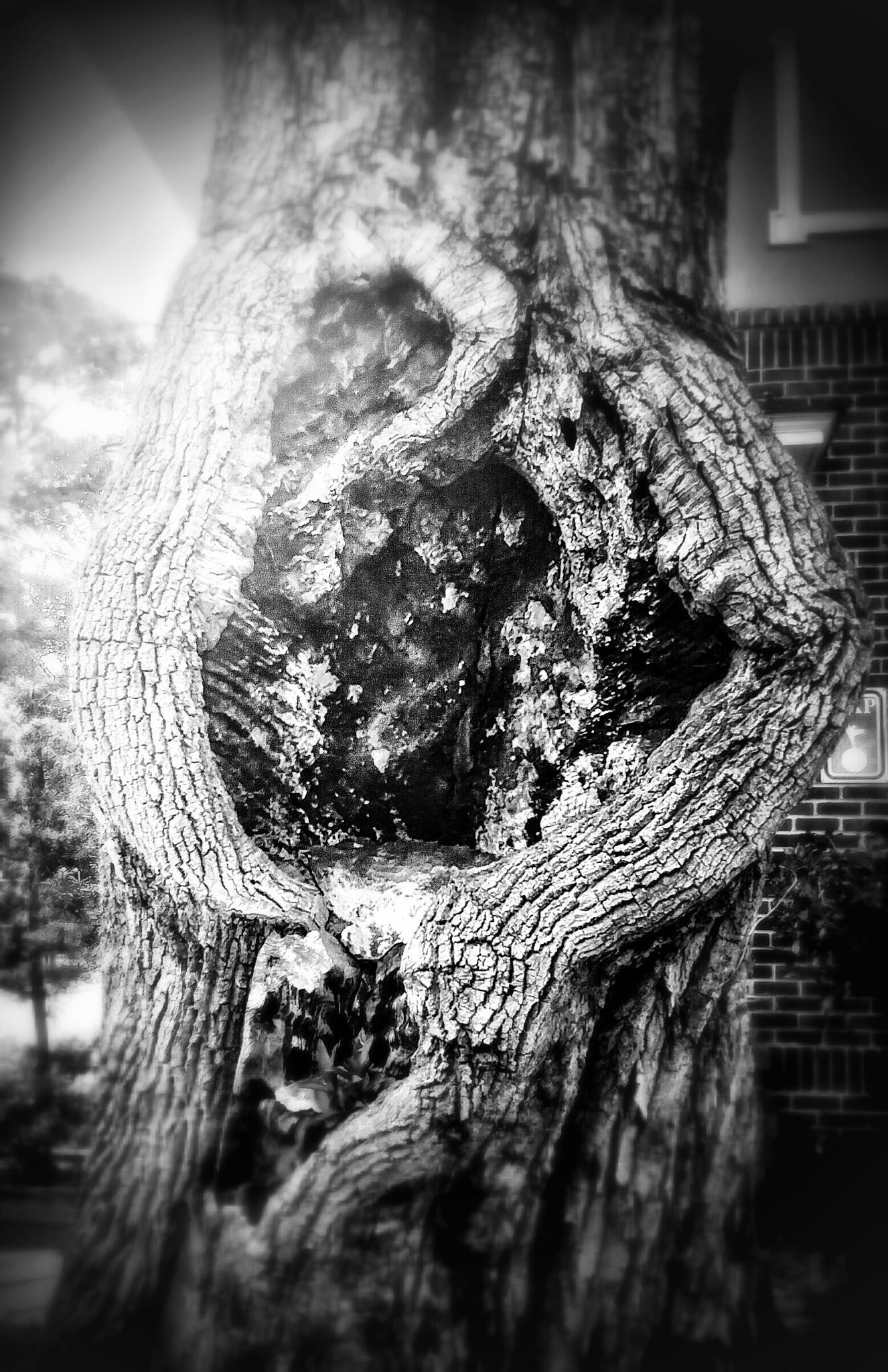 tree by sstokes3