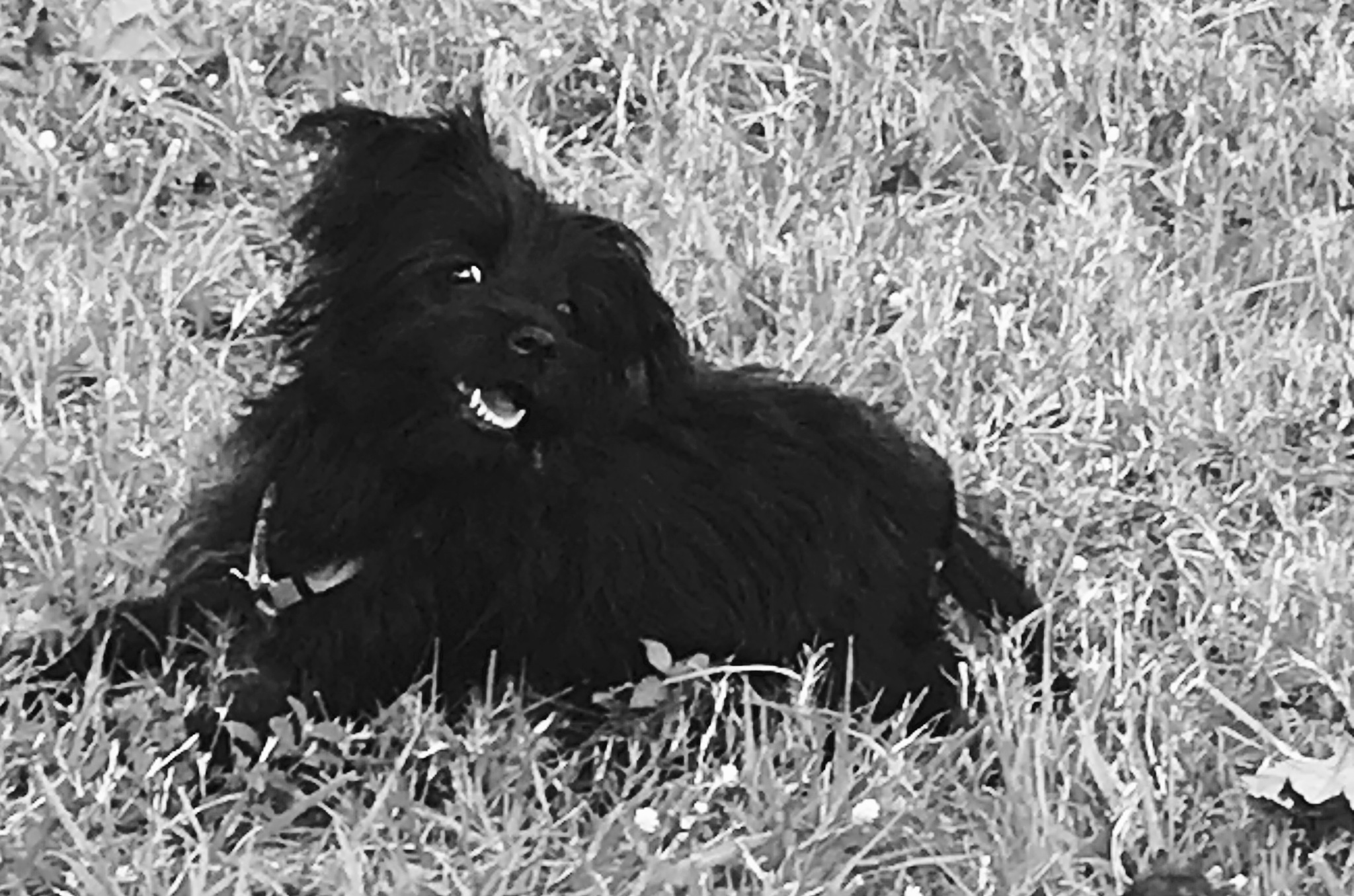 Sooty doggo  by sstokes3