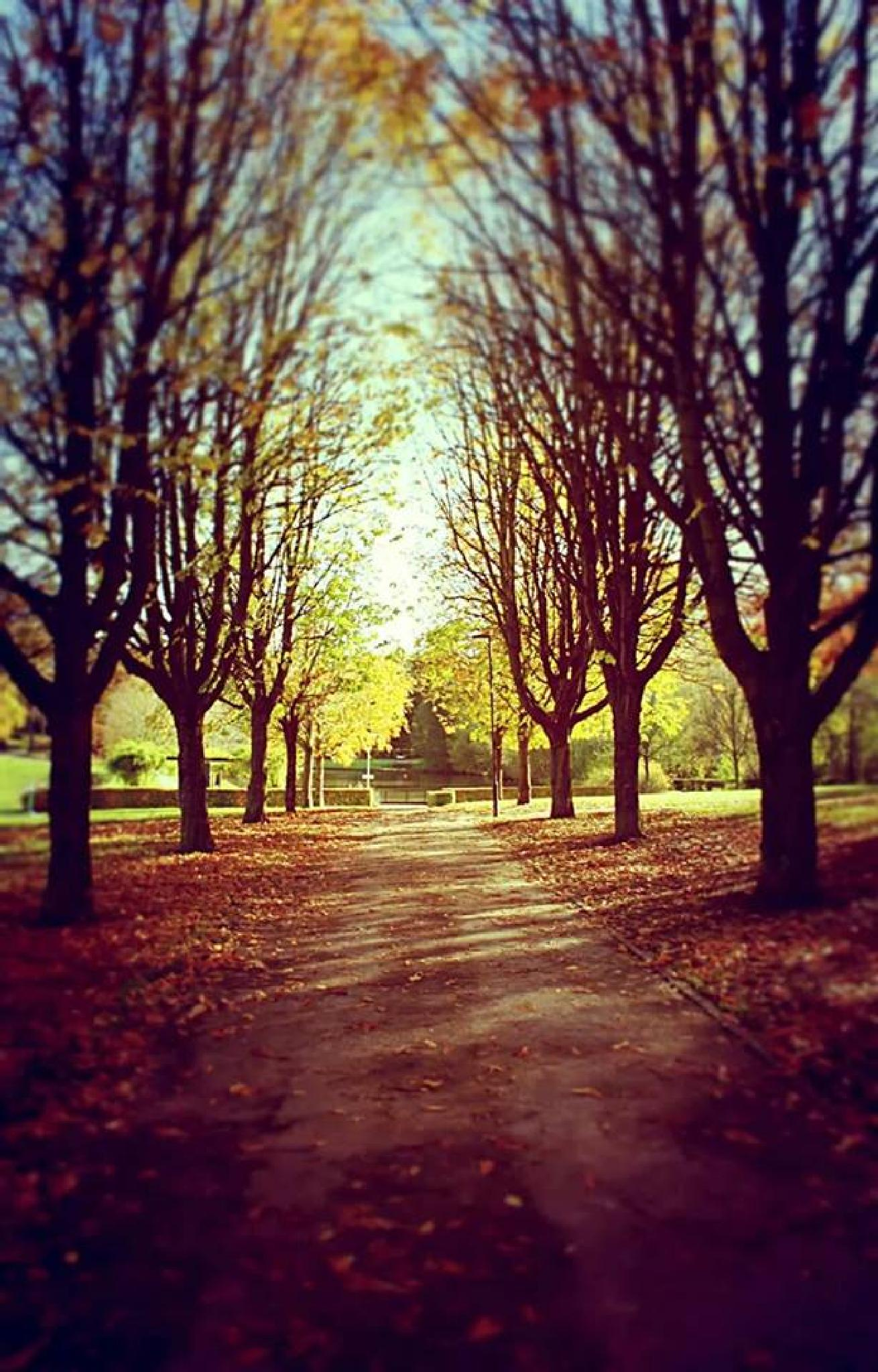 In a park in my hometown #Vaals, on a fall day by audrey.verhoevenernst