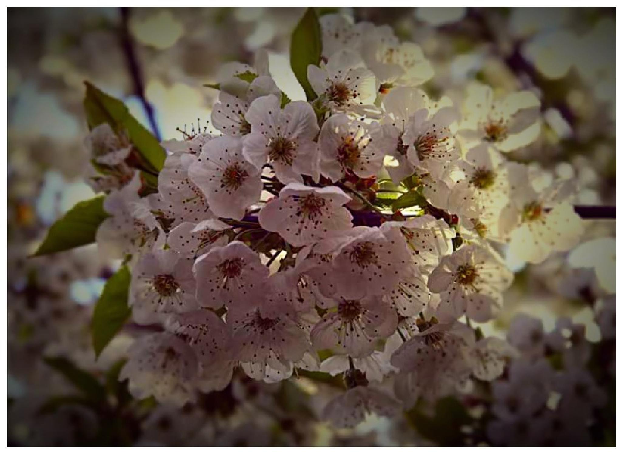 Beautiful blossom  by audrey.verhoevenernst