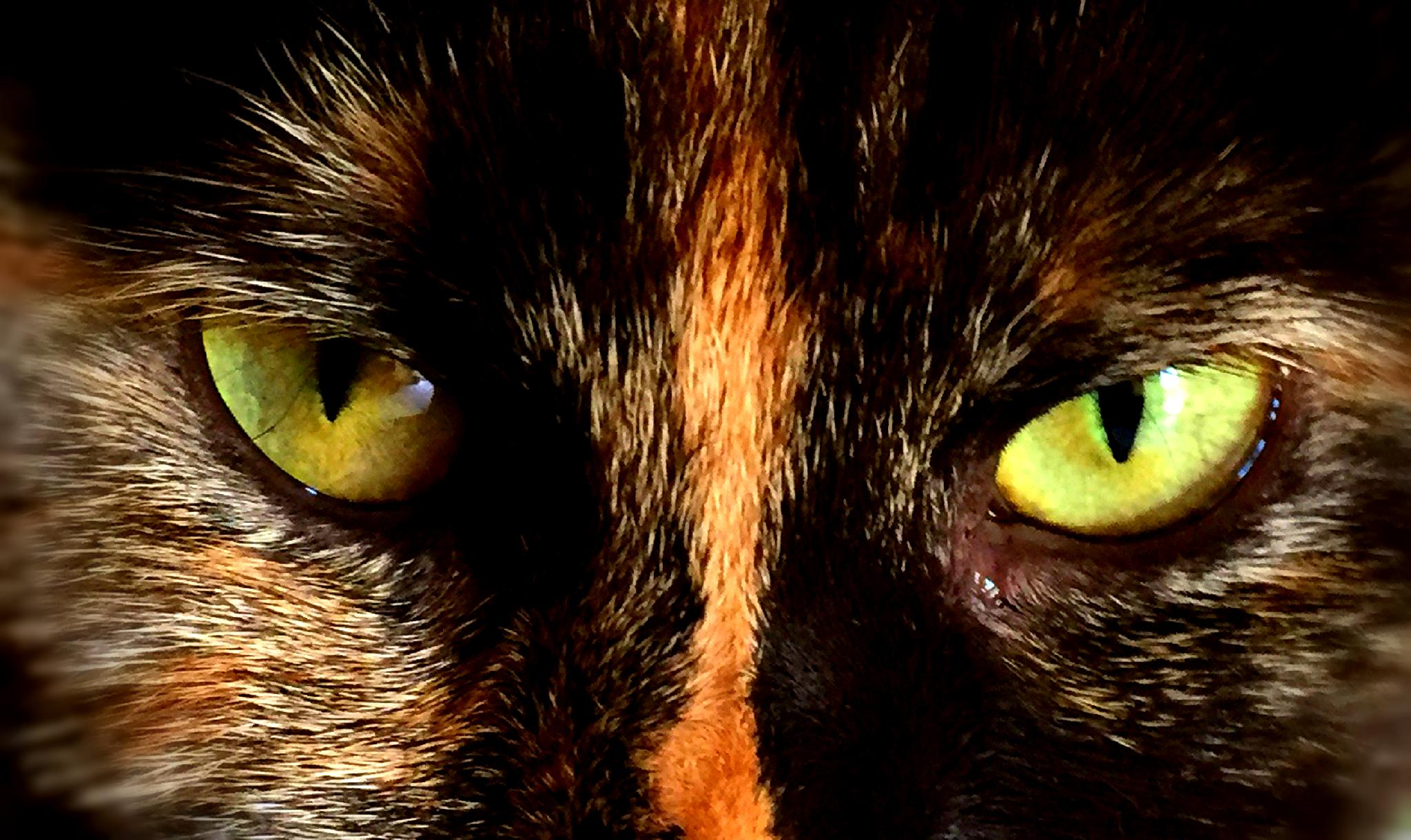 Cat's Eyes by Tweaky Blinders