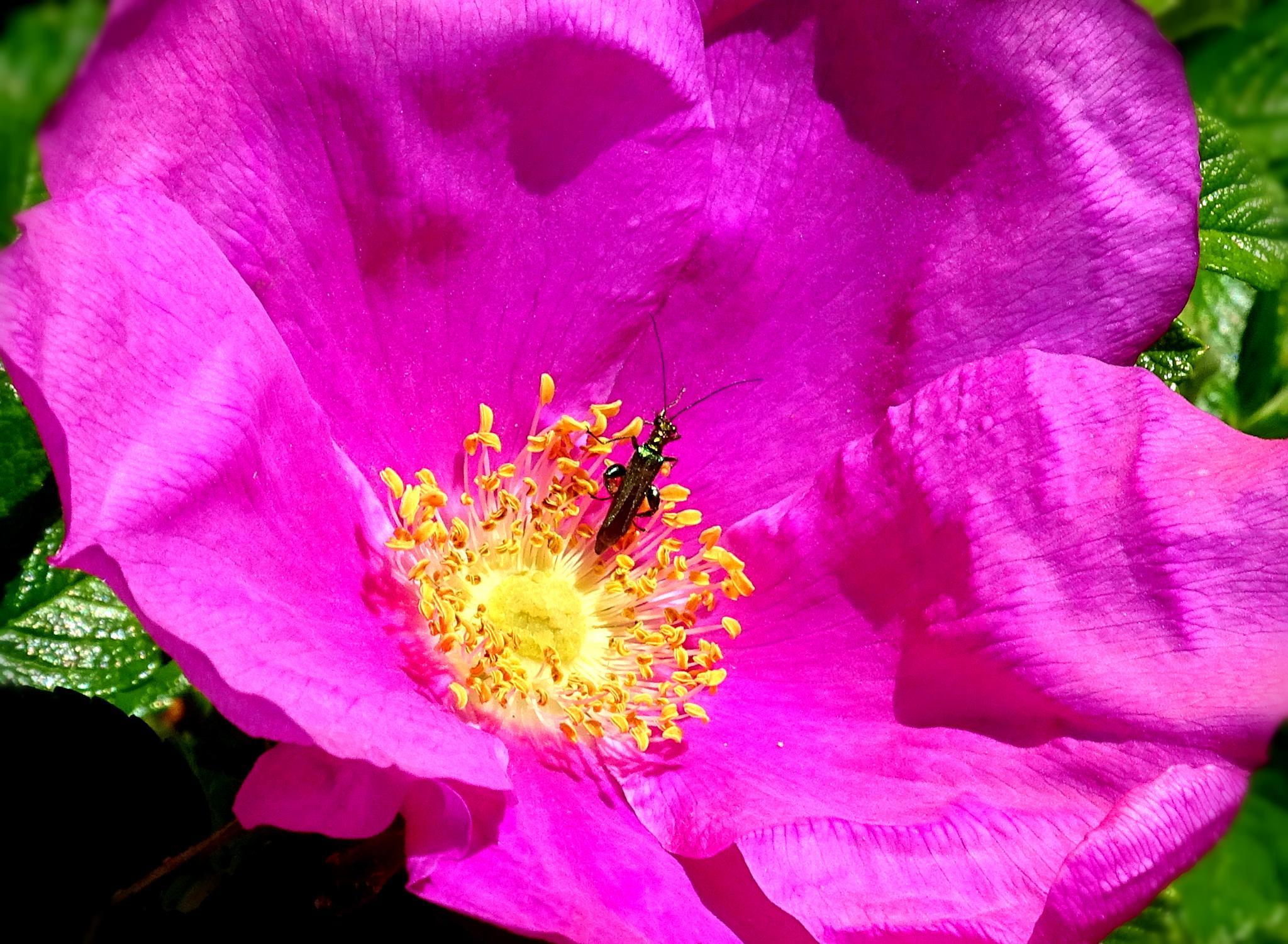 Bug Sunbathing by Tweaky Blinders