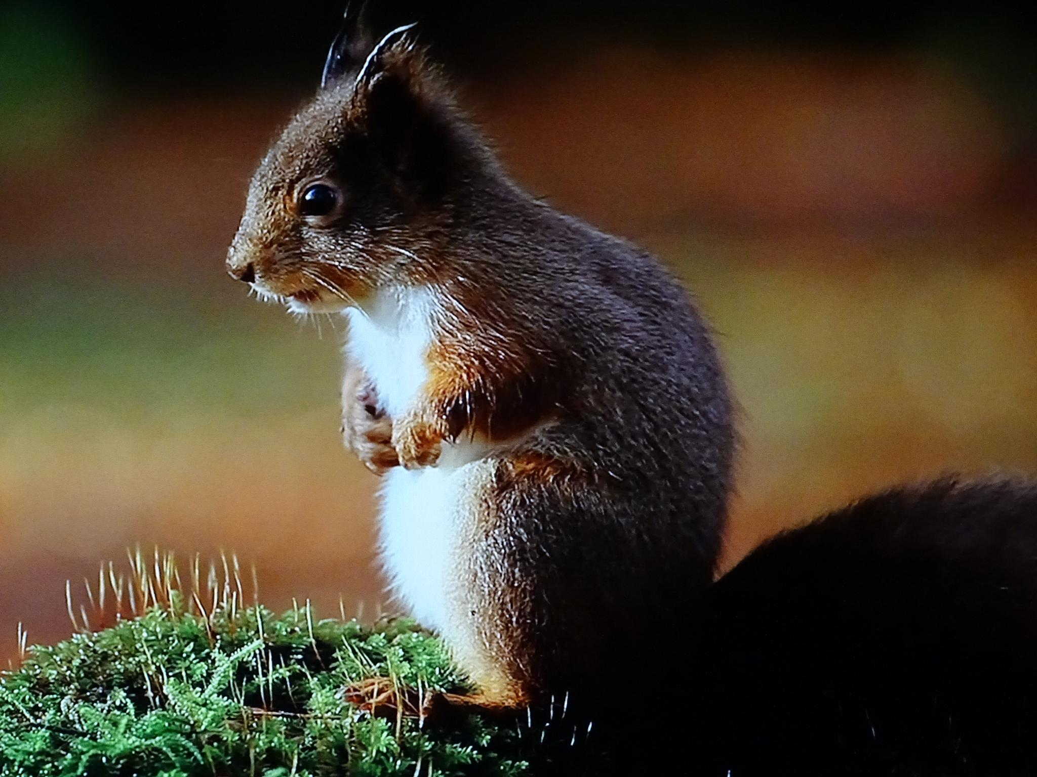 Photo in Nature #nature #squirrel #tweaky blinders #up close and personal