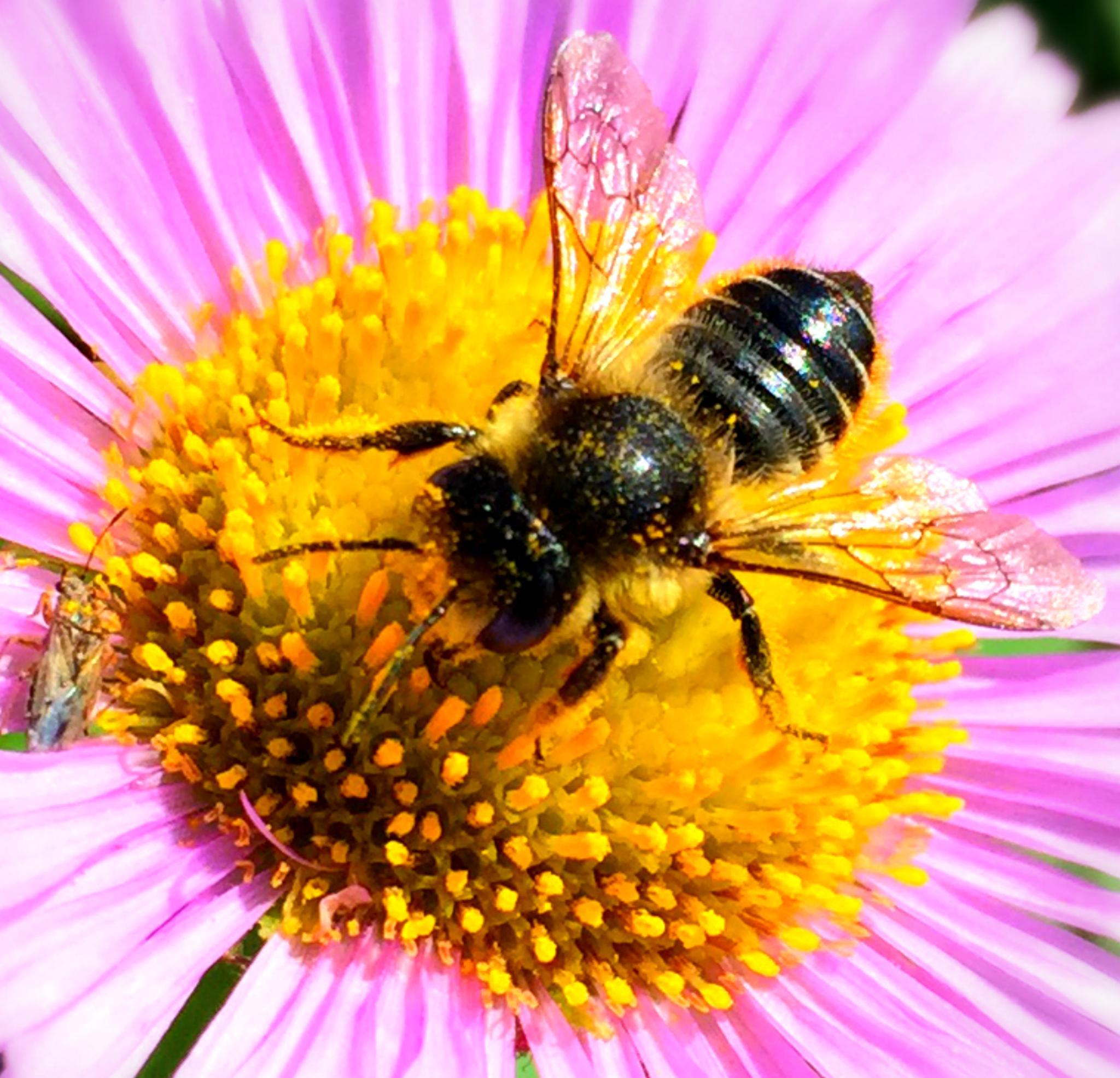 Pollen Harvester by Tweaky Blinders