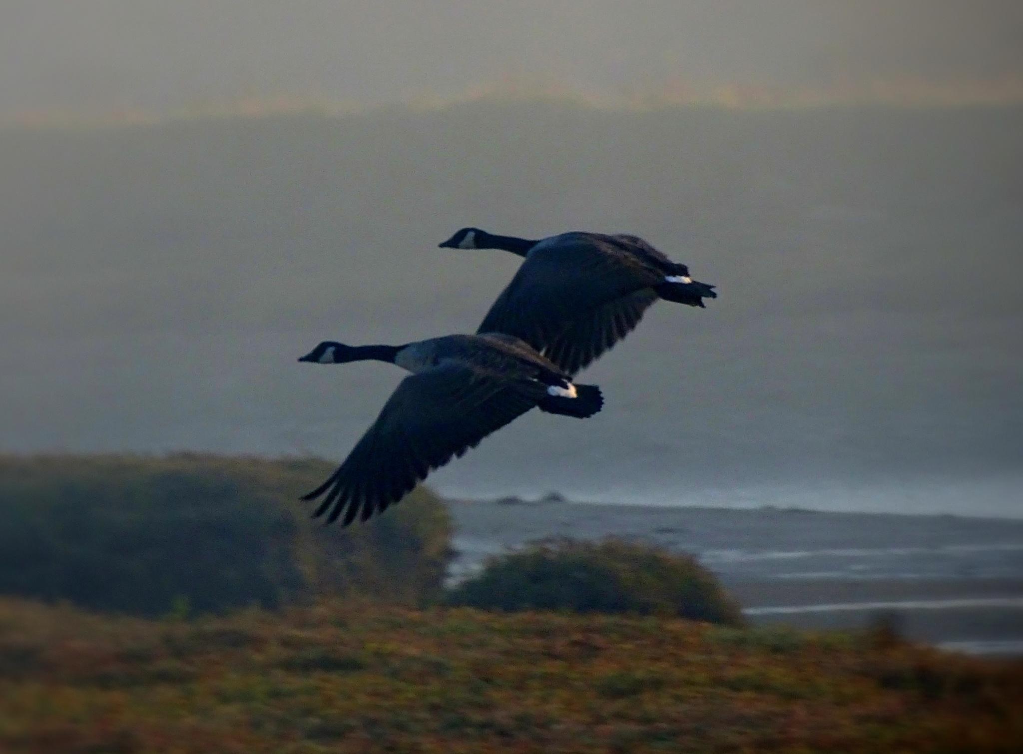 Dawn Flight by Tweaky Blinders