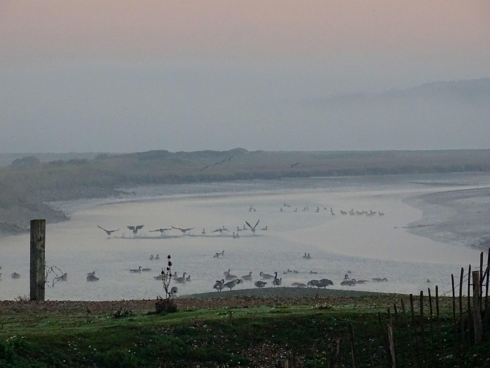 Misty River Chorus Line by Tweaky Blinders