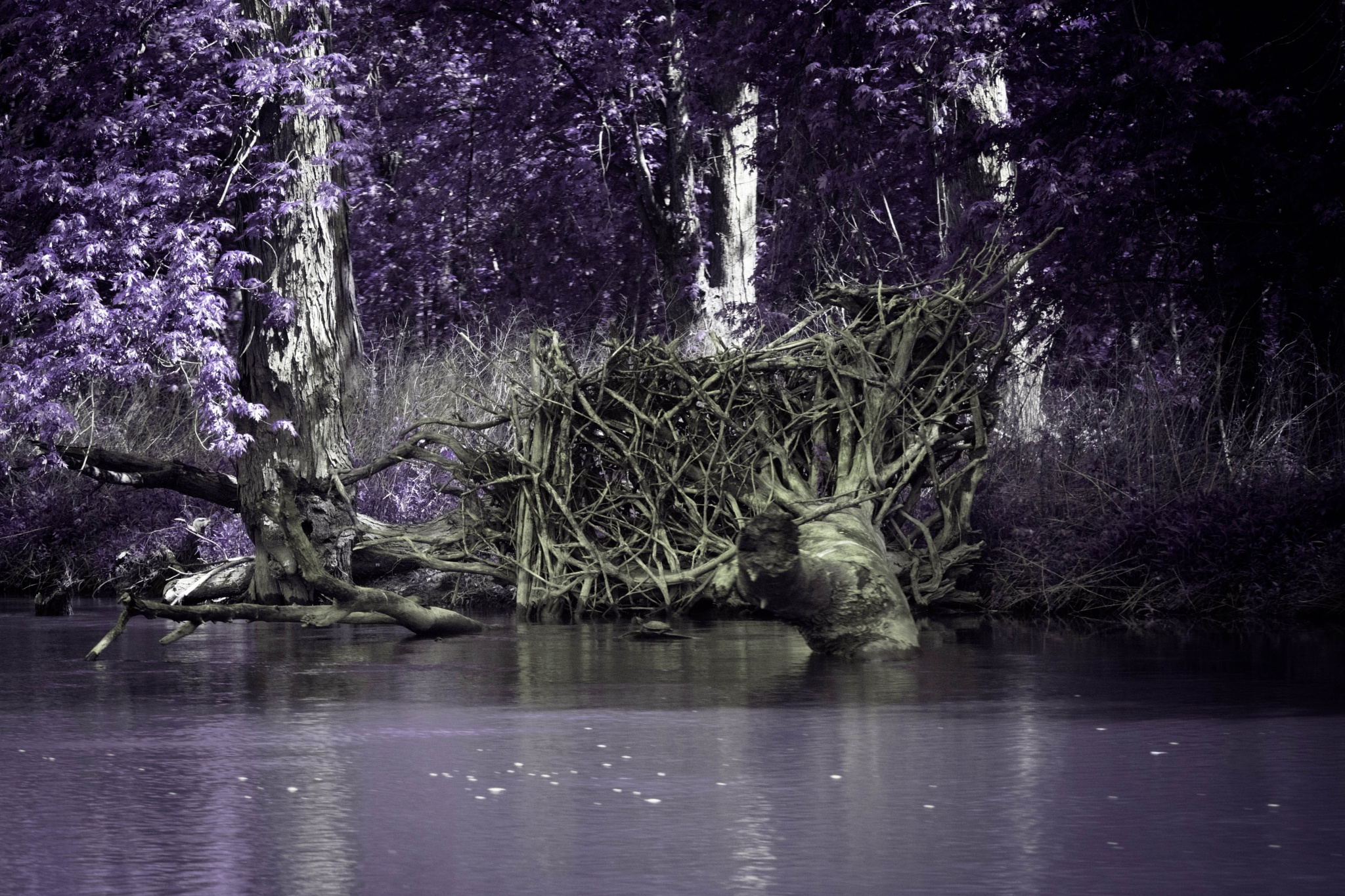 Photo in Landscape #tree roots #mississippi river #backwater #infrared #illinois #spring
