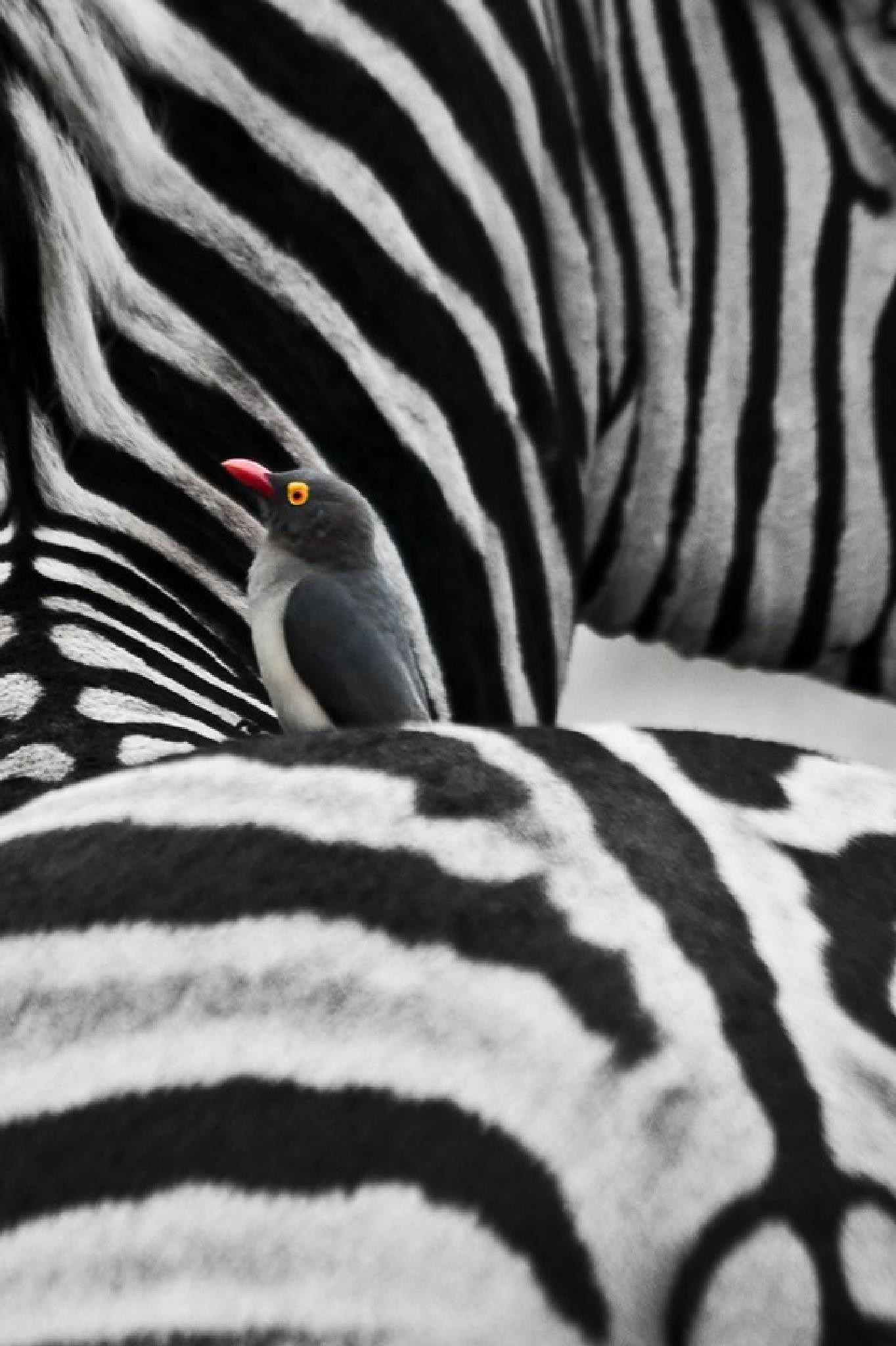 oxpecker by ragnaroek