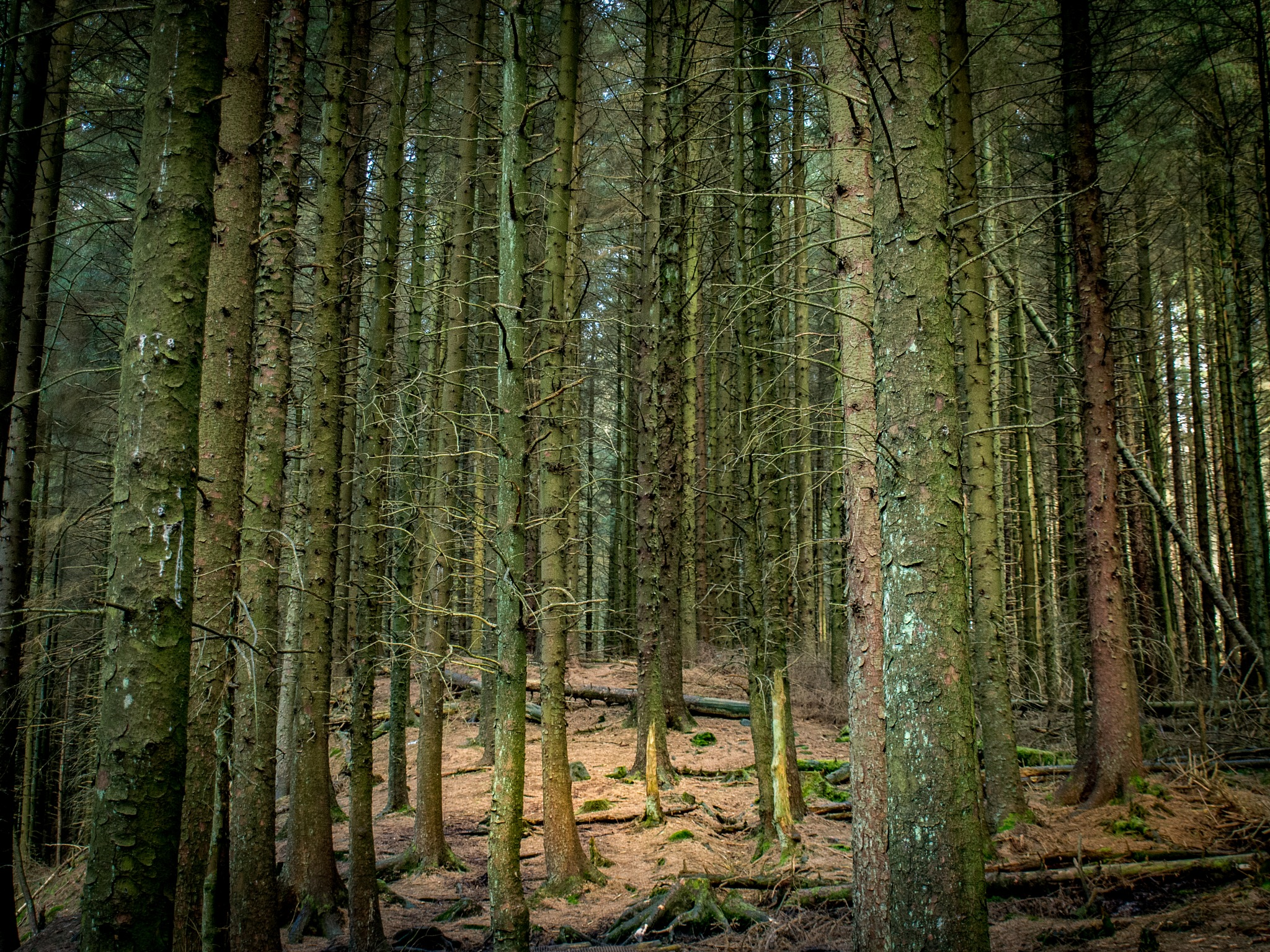 Ladyclough Forest by chris.bardsley.39
