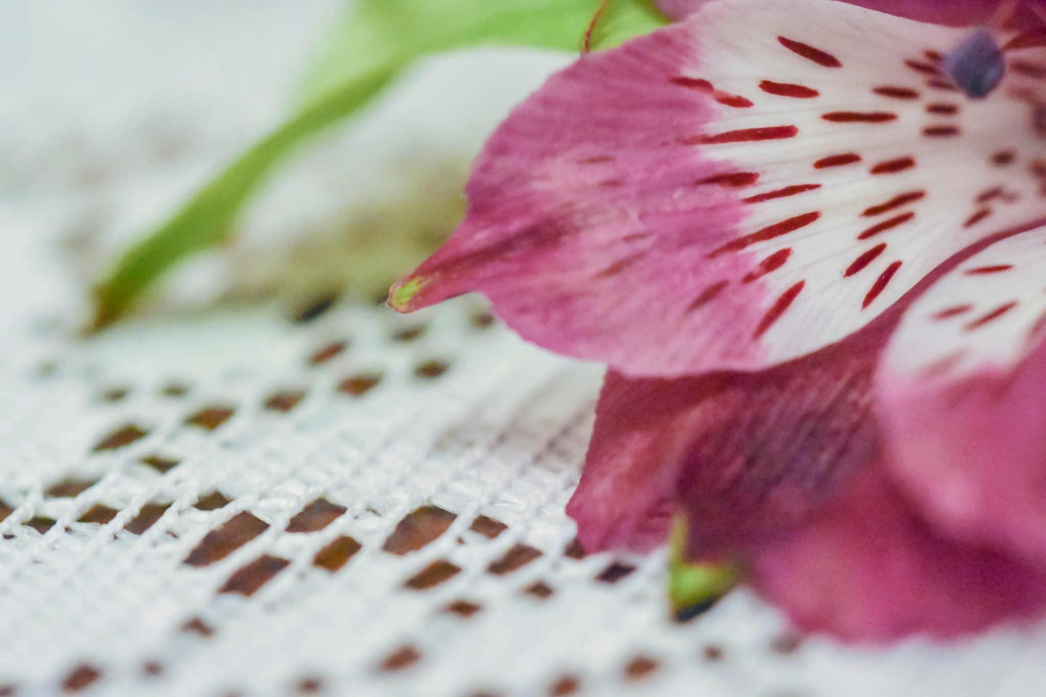 purple flower on a tablecloth by marielle axelsson