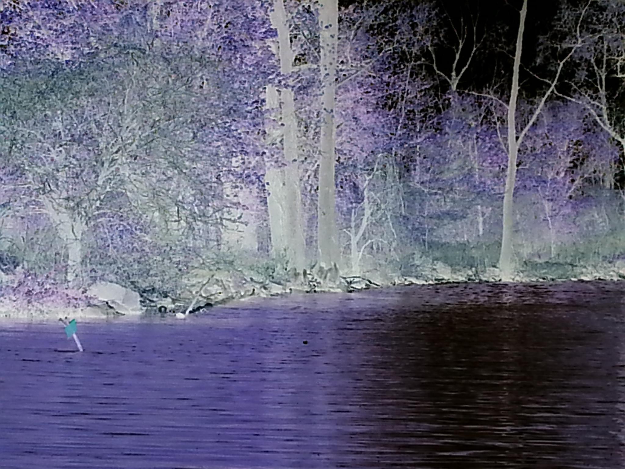 Photo in Nature #purple #negative #artsy