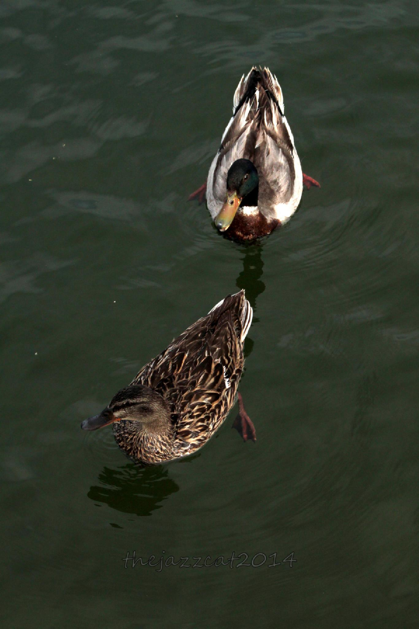 just 2 duckie by P. Michael Fadyk