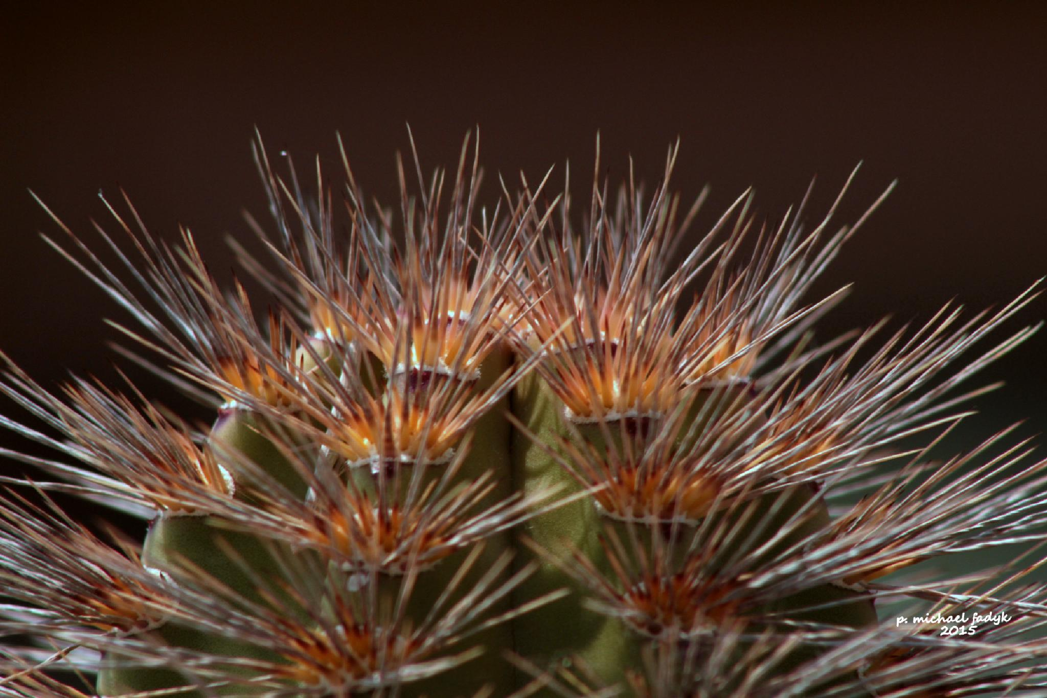 cactus 1 by P. Michael Fadyk